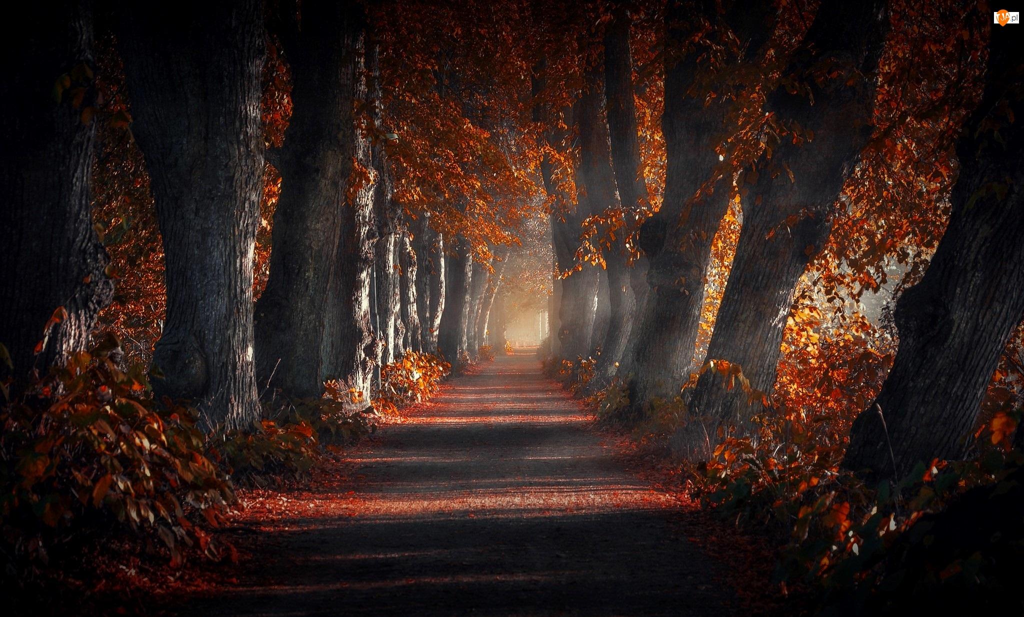 Droga, Jesień, Drzewa