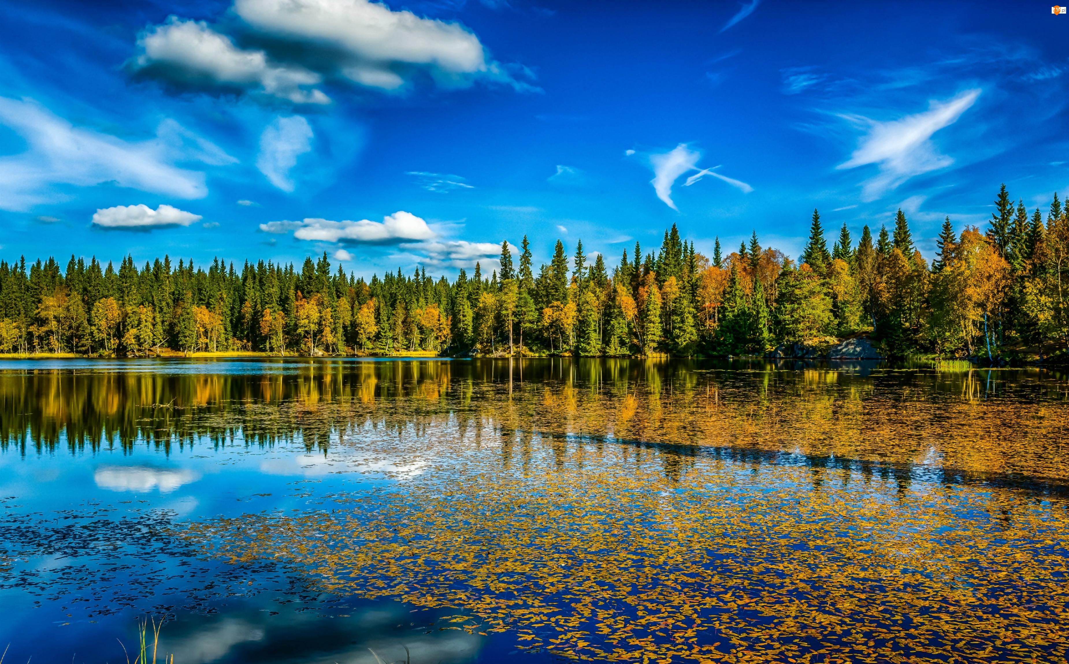 Jesień, Jezioro, Las, Drzewa
