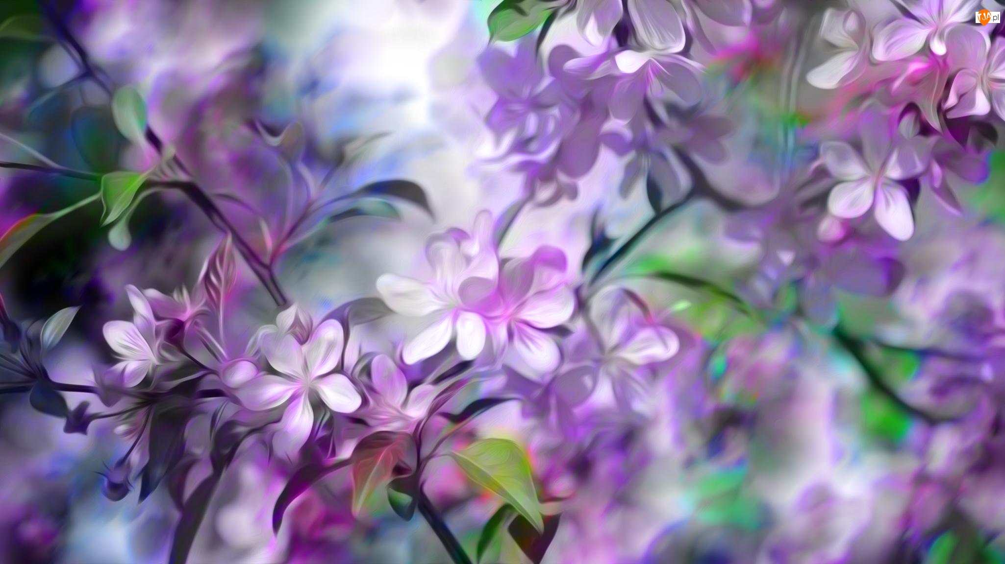 Grafika, Biało-różowe, Kwiaty, Gałązki