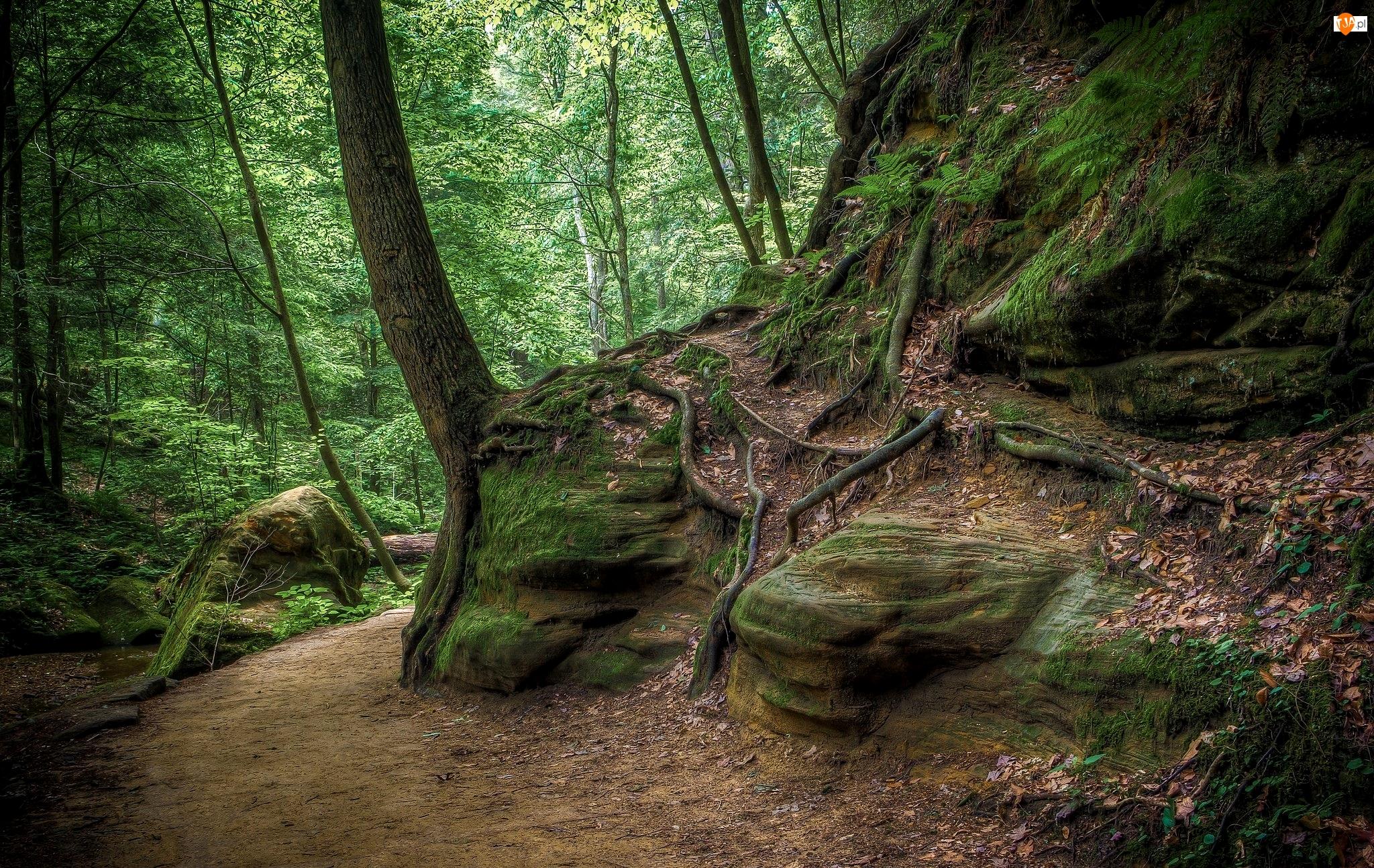 Skały, Las, Omszałe, Liście, Drzewa, Kamienie, Ścieżka, Korzenie