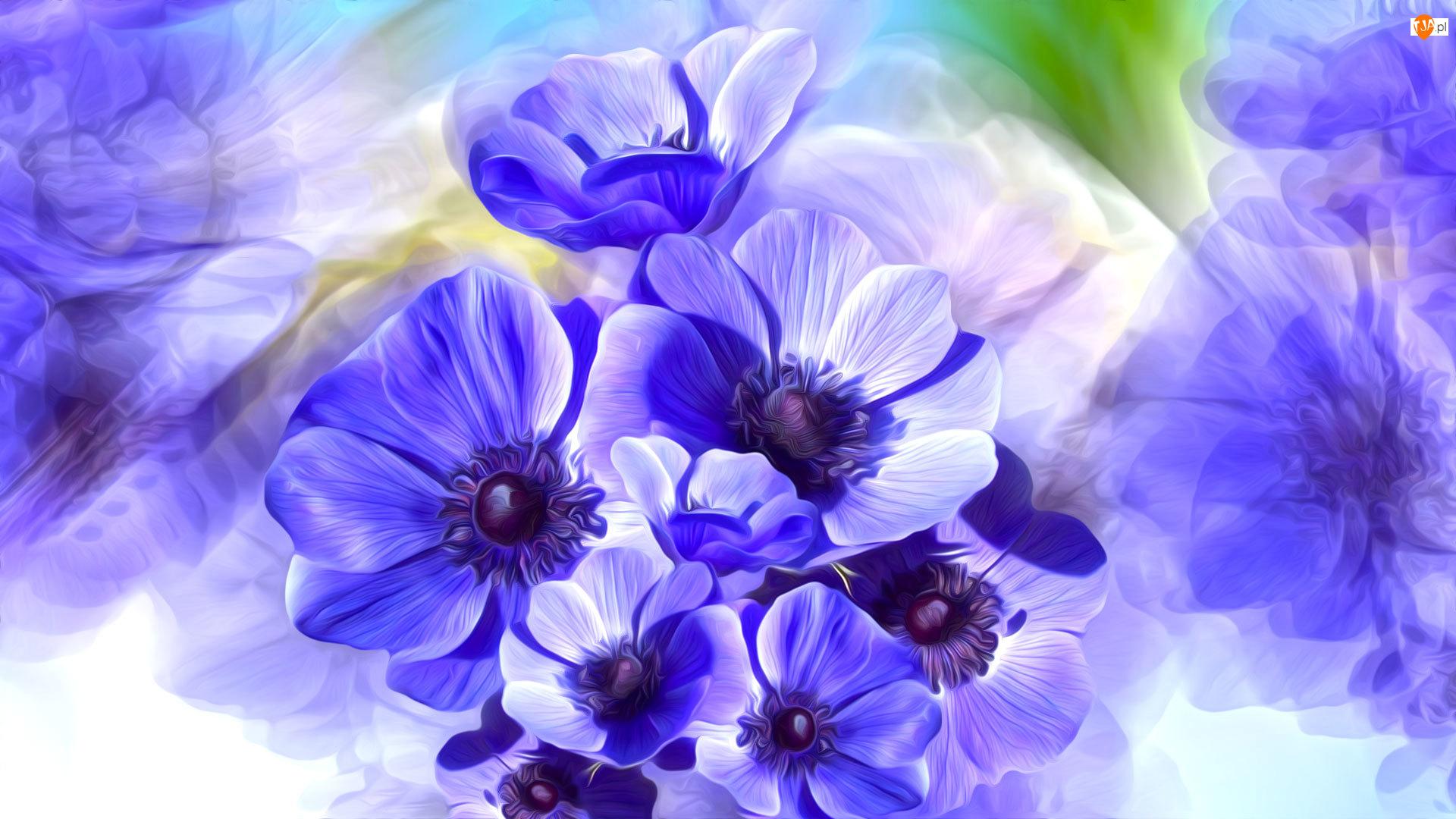 Grafika, Kwiaty, Niebieskie, Zawilce