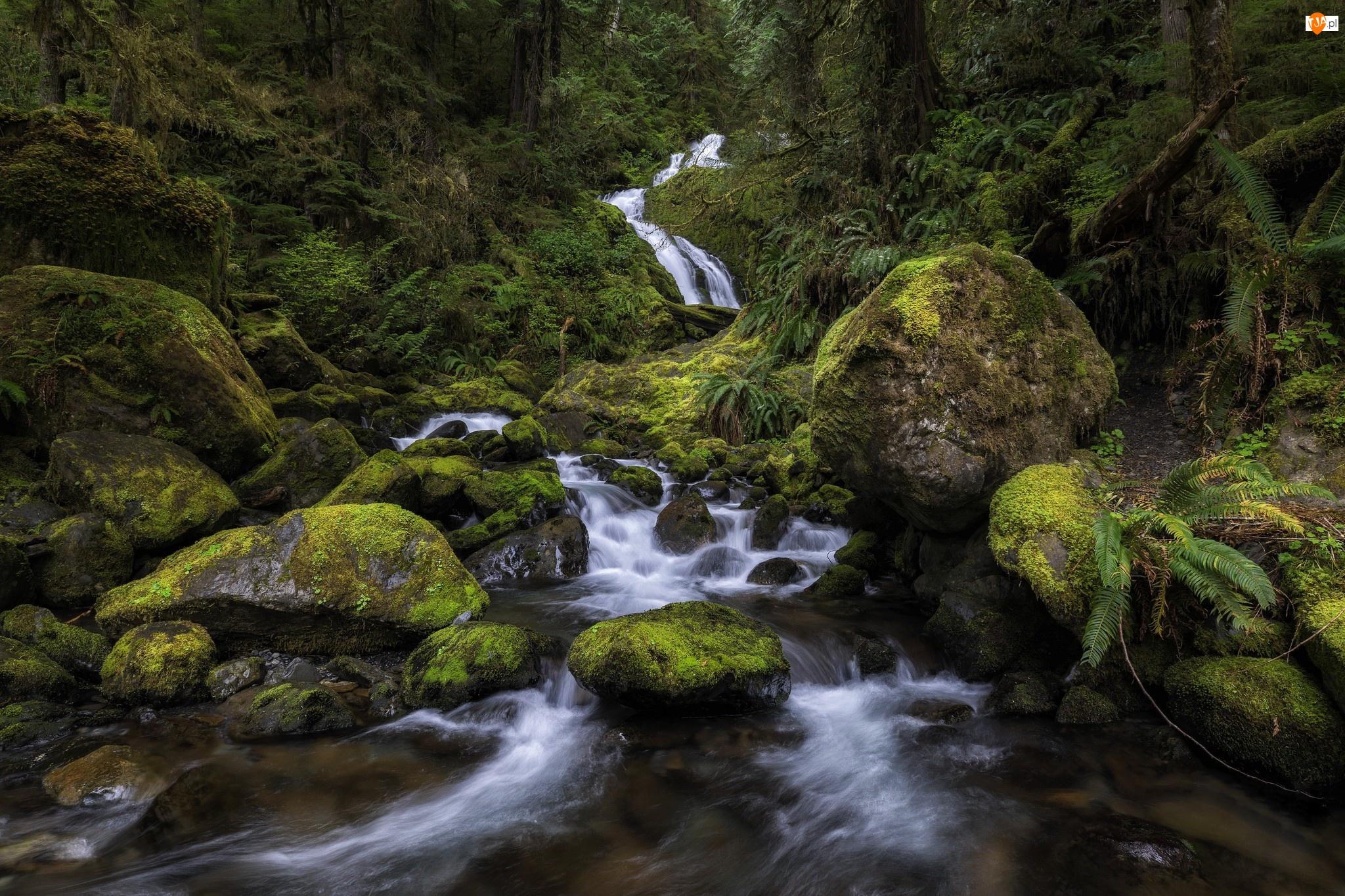 Rośliny, Wodospad Bunch Falls, Drzewa, Kamienie, Mech, Park Narodowy Olympic, Stan Waszyngton, Rzeka, Stany Zjednoczone