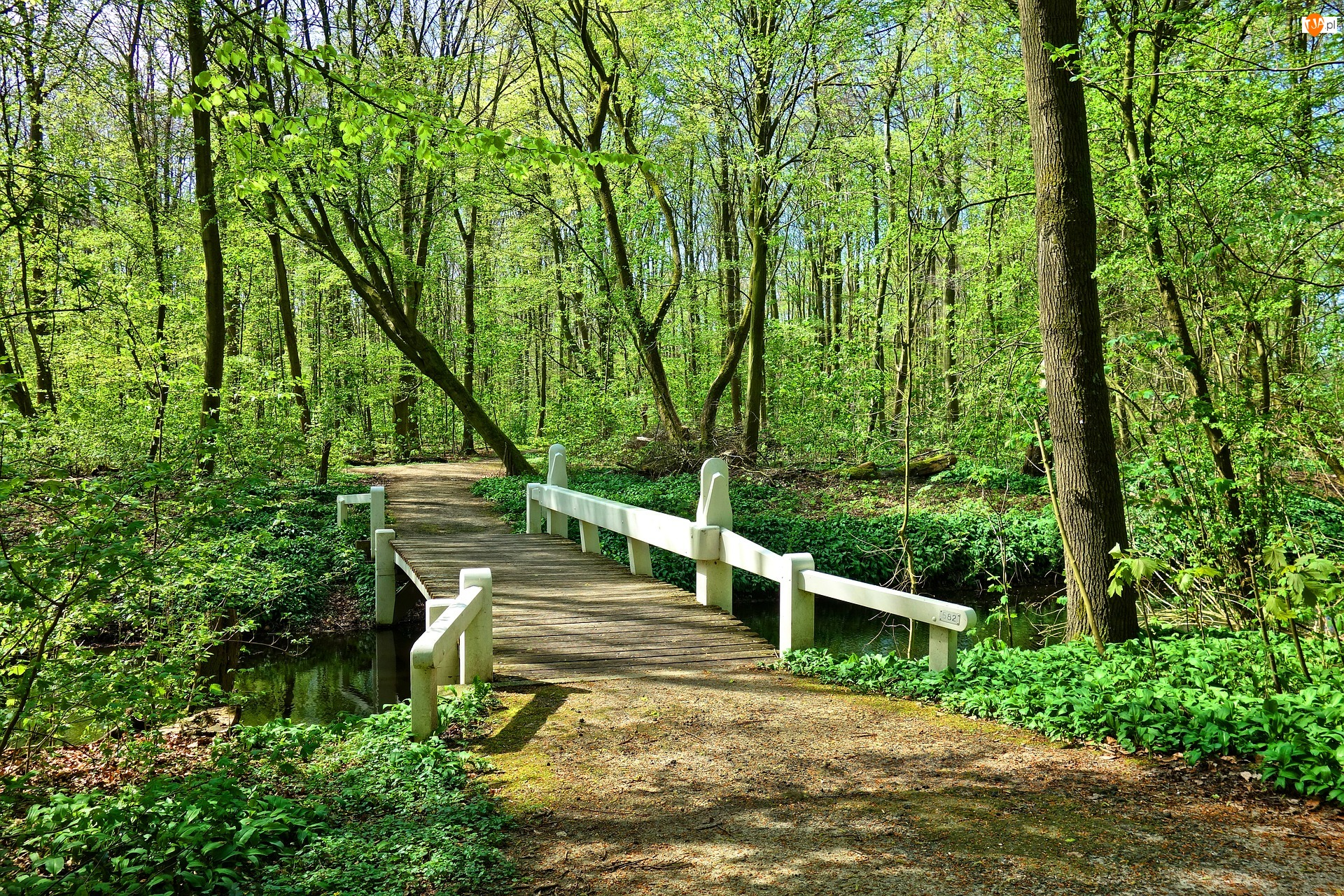Mostek, Rzeczka, Droga, Biały, Liście, Zielone, Drzewa