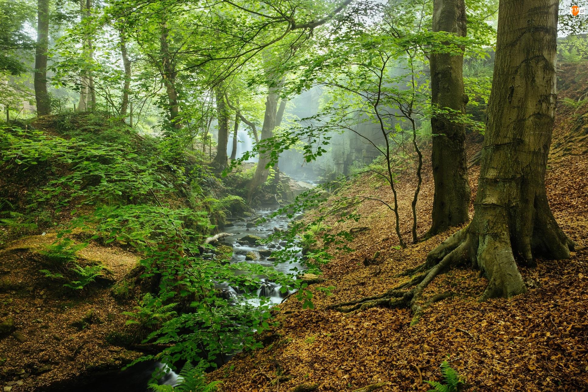 Hrabstwo Derbyshire, Park Narodowy Peak District, Mgła, Anglia, Strumyk, Drzewa, Las