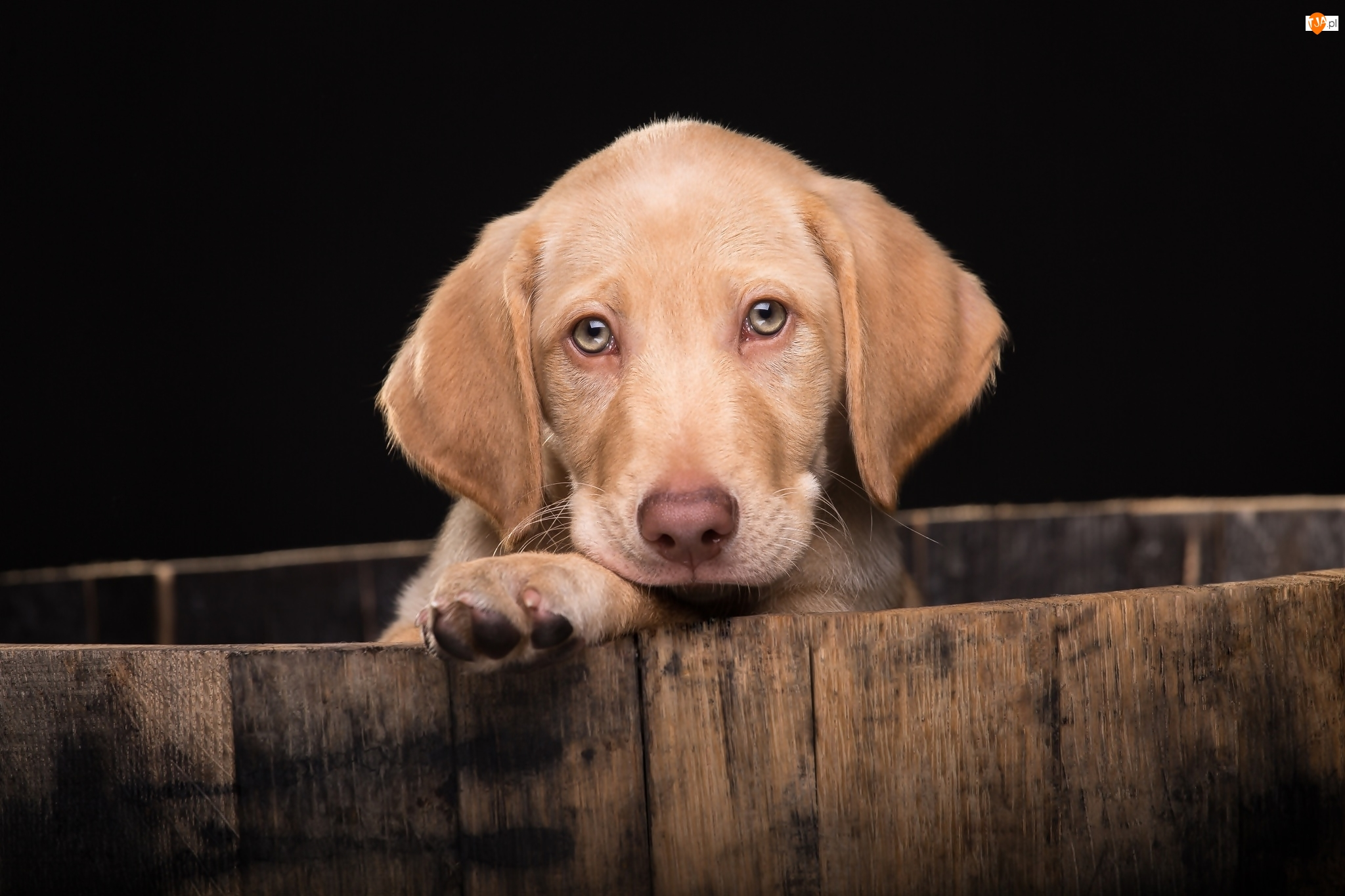 Szczeniak, Pies, Smutny