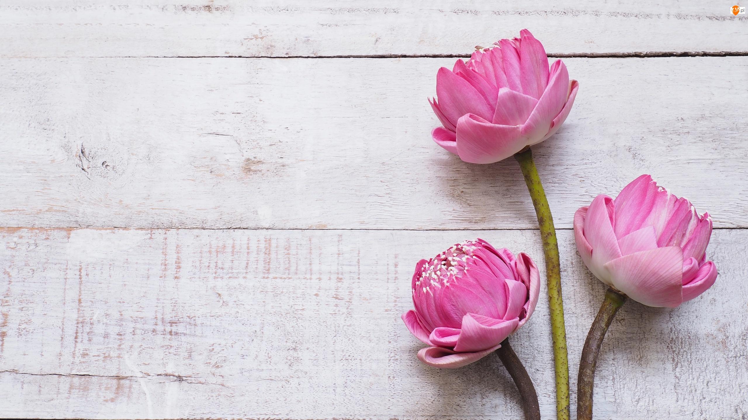 Trzy, Deski, Kwiaty, Różowe, Lotosy