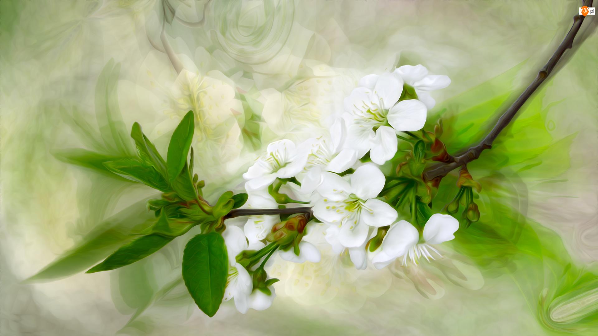 Grafika, Gałązka, Kwiaty, Listki