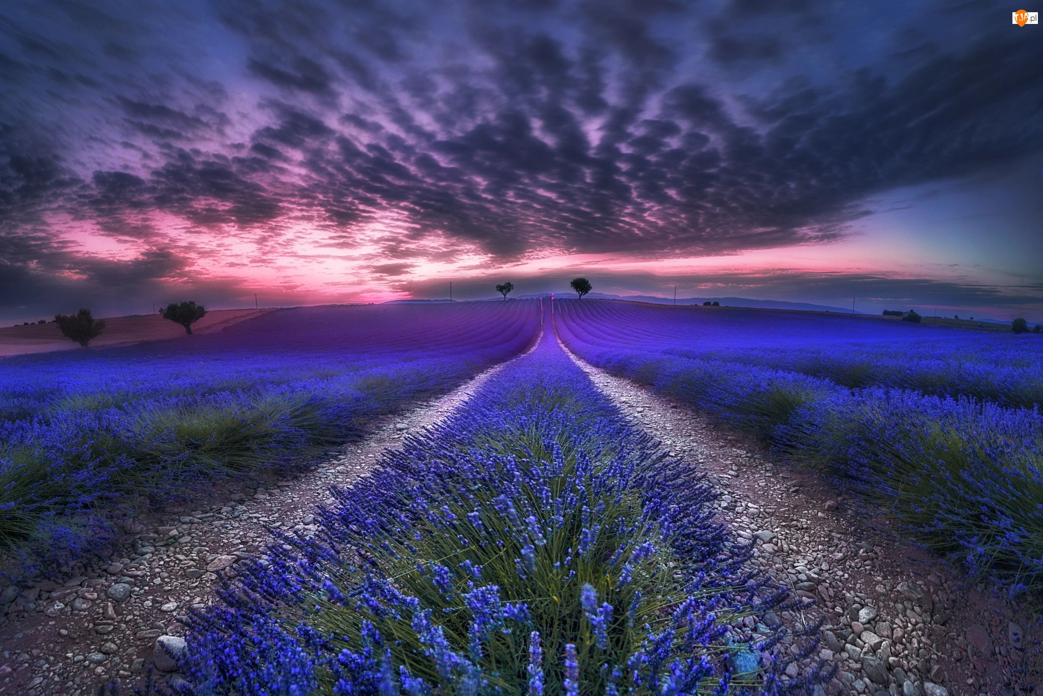 Miejscowość Valensole, Zachód słońca, Lawenda, Prowansja, Chmury, Drzewa, Francja, Pole