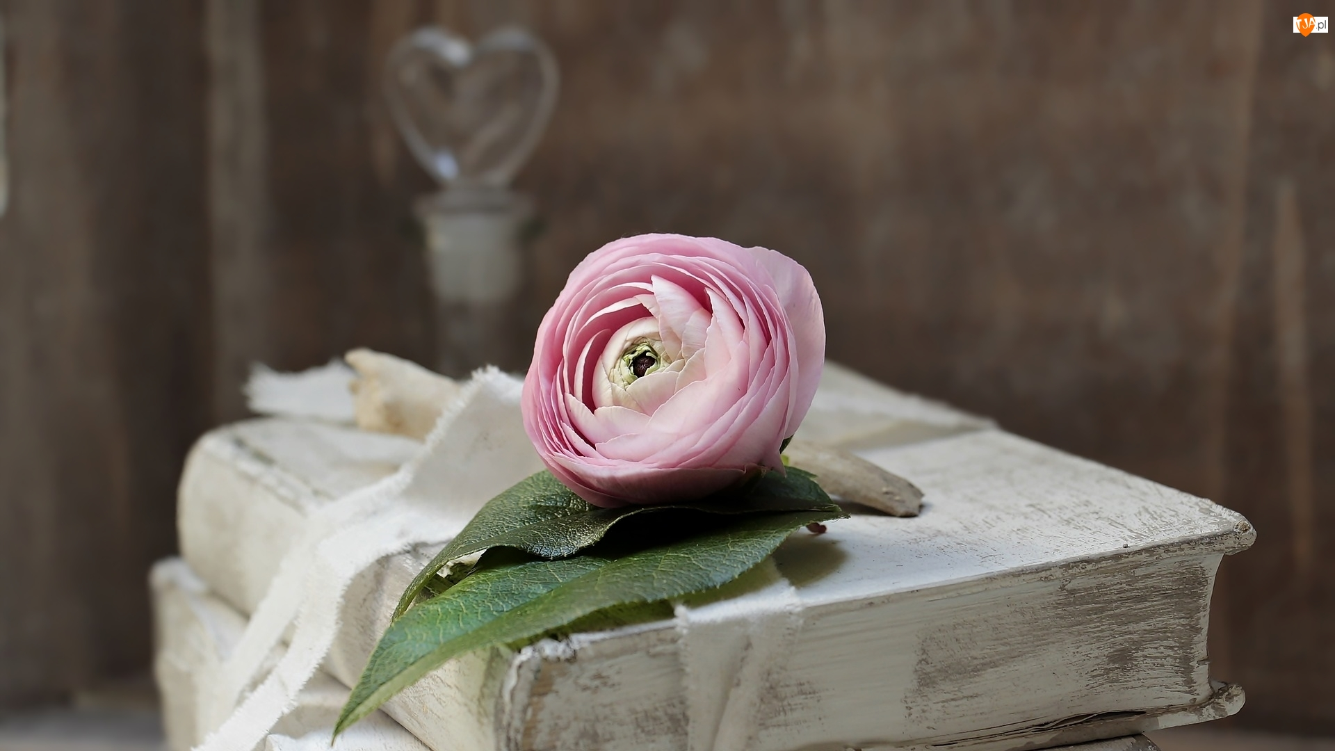 Jaskier, Książka, Kwiat
