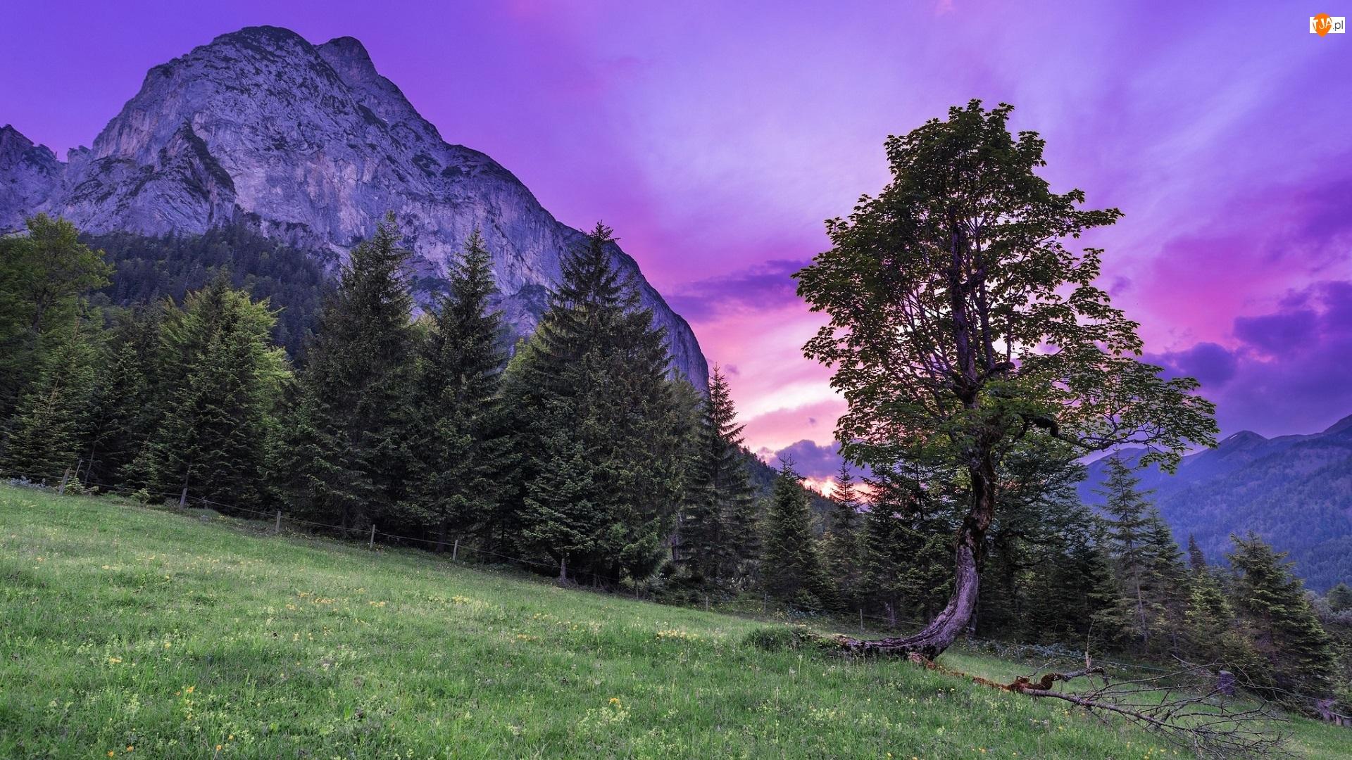 Łąka, Zachód słońca, Góra, Drzewa