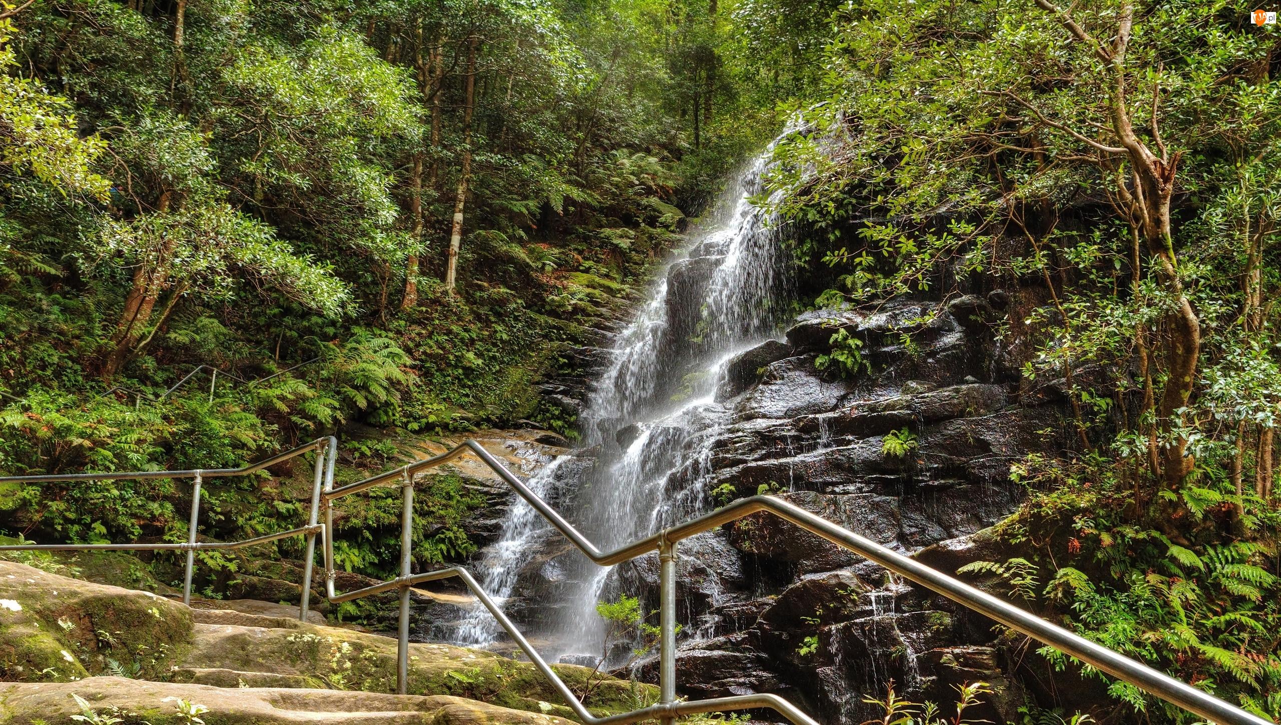 Ogrodzenie, Park Narodowy Blue Mountains, Paprocie, Las, Drzewa, Stan Nowa Południowa Walia, Australia, Wodospad Sylvia Falls, Skały