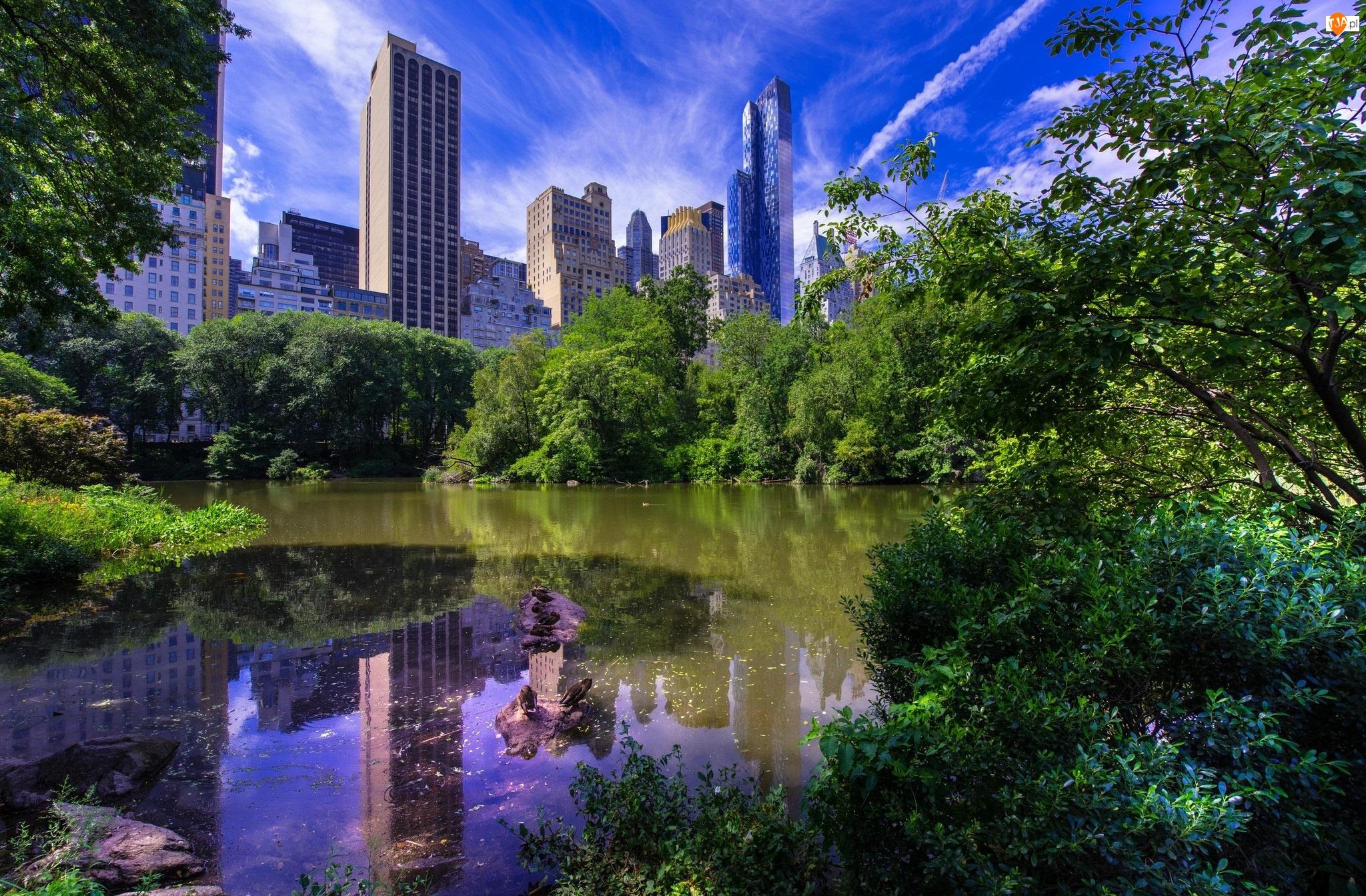 Nowy Jork, Dzielnica Manhattan, Drzewa, Stany Zjednoczone, Drapacze chmur, Staw, Park miejski Central Park