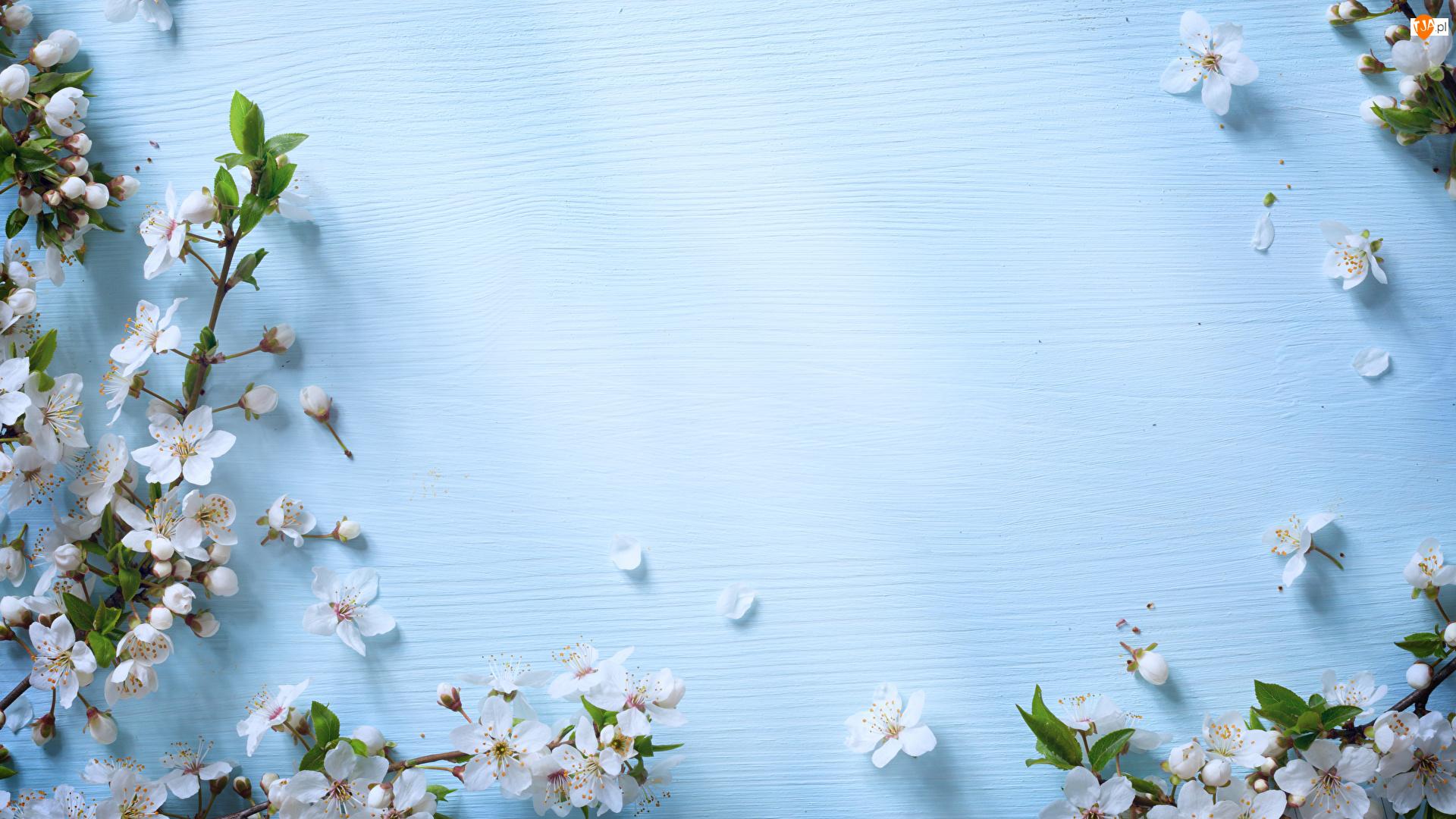 Białe, Niebieskie tło, Gałązki, Kwitnące, Kwiaty