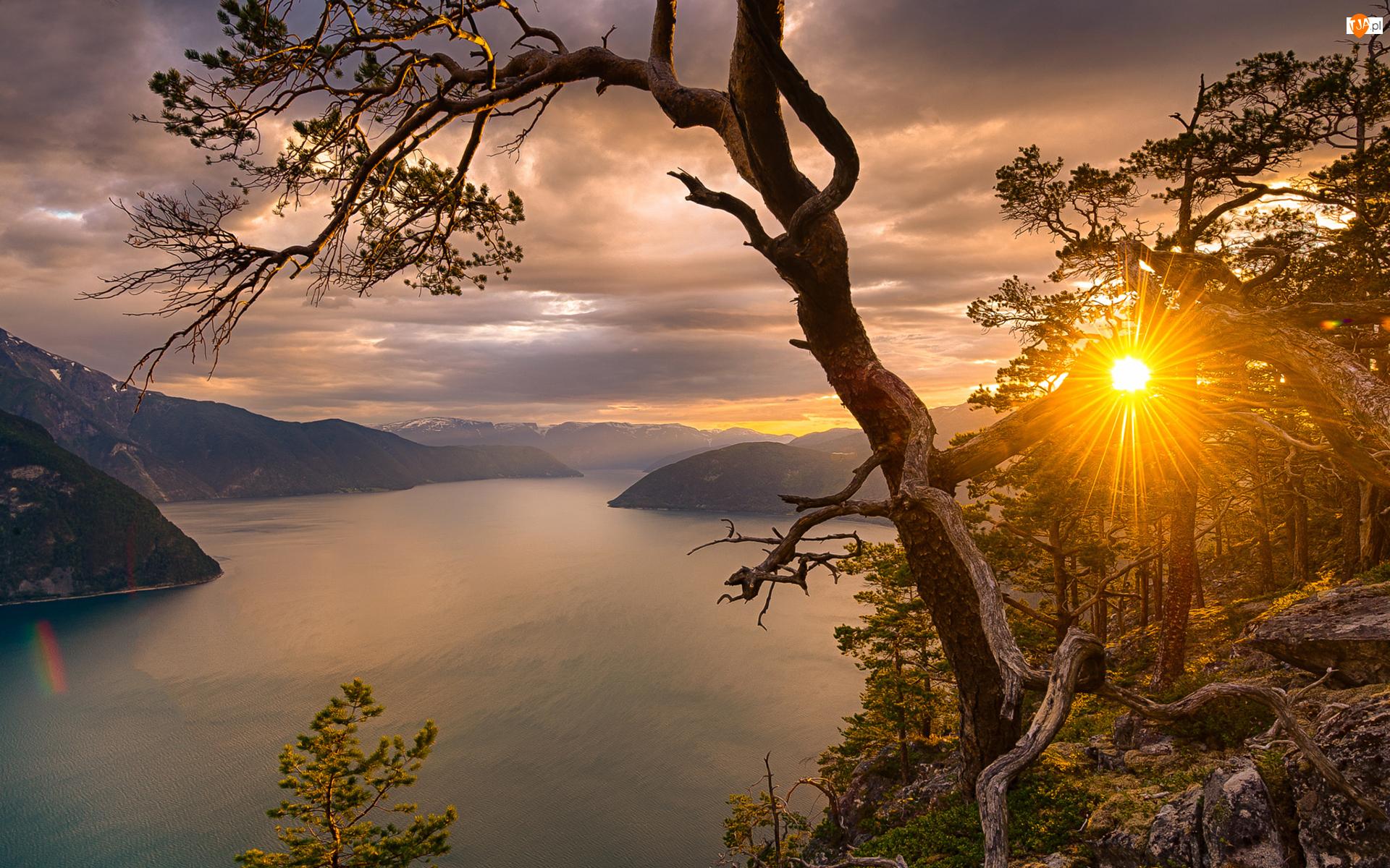 Promienie słońca, Fiord Sognefjorden, Drzewa, Góry, Okręg Sogn og Fjordane, Zachód słońca, Drzewo, Norwegia