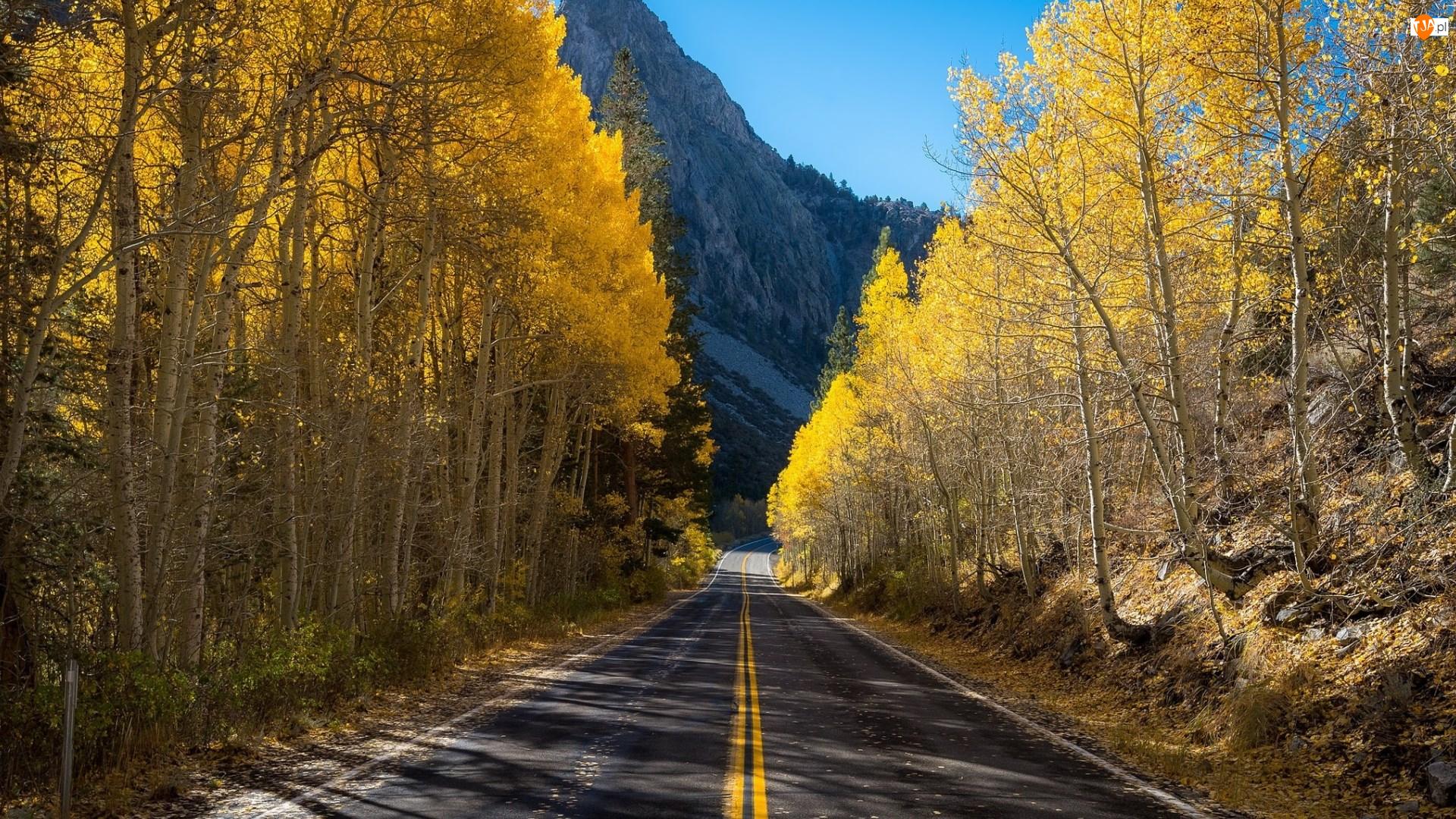 Góry, Droga, Drzewa, Jesień