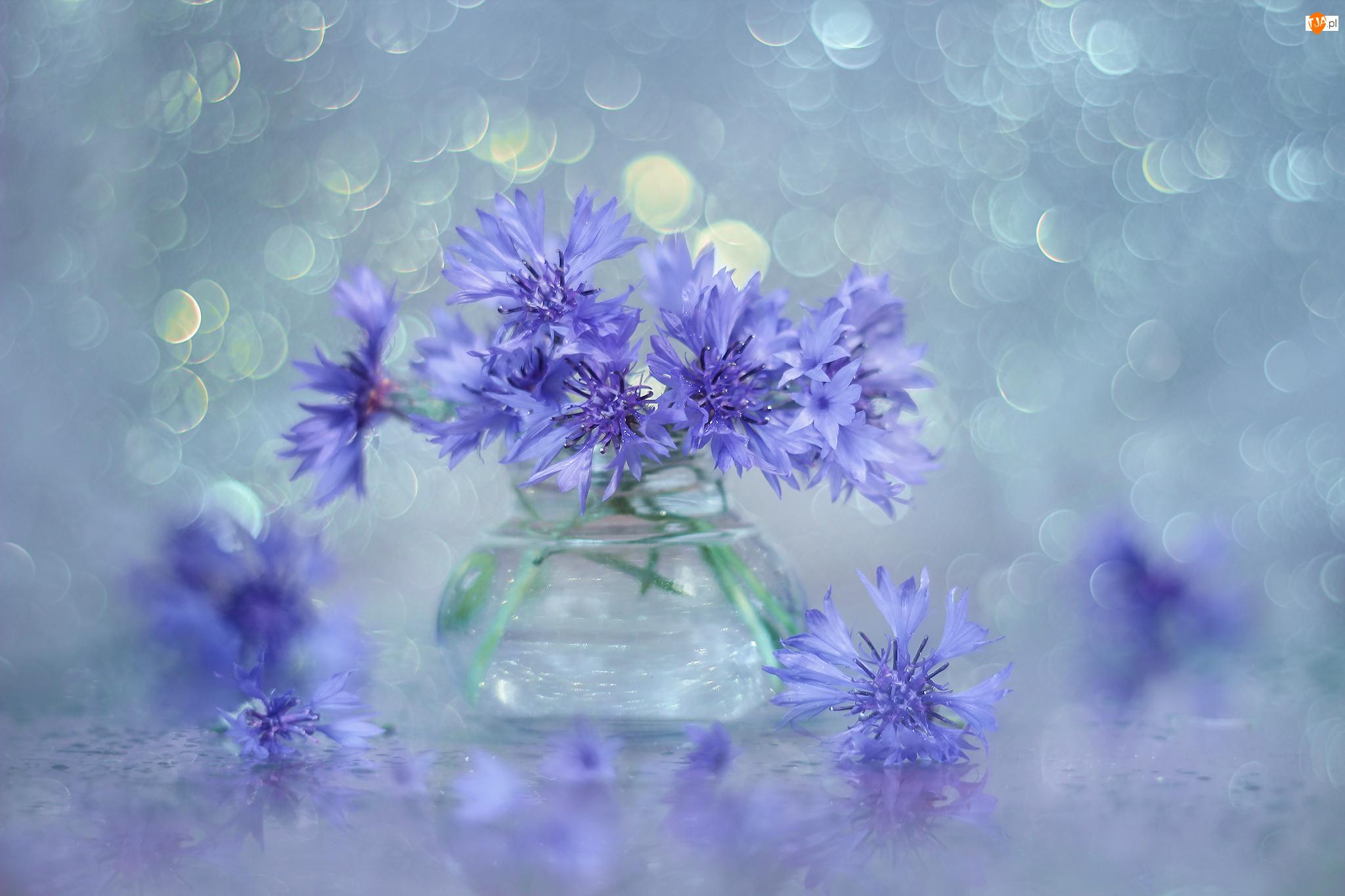 Wazonik, Chabry, Niebieskie, Kwiaty