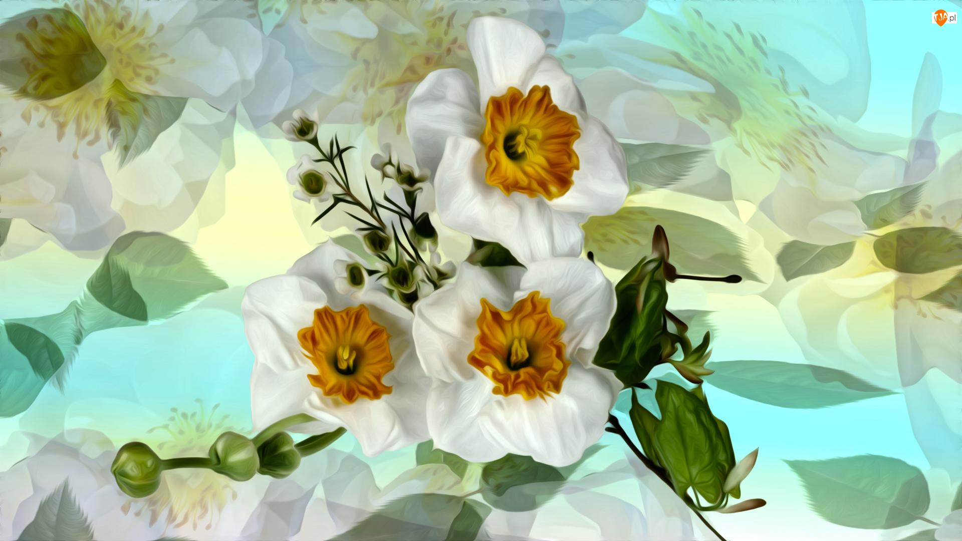 Grafika, Kwiaty, Narcyzy