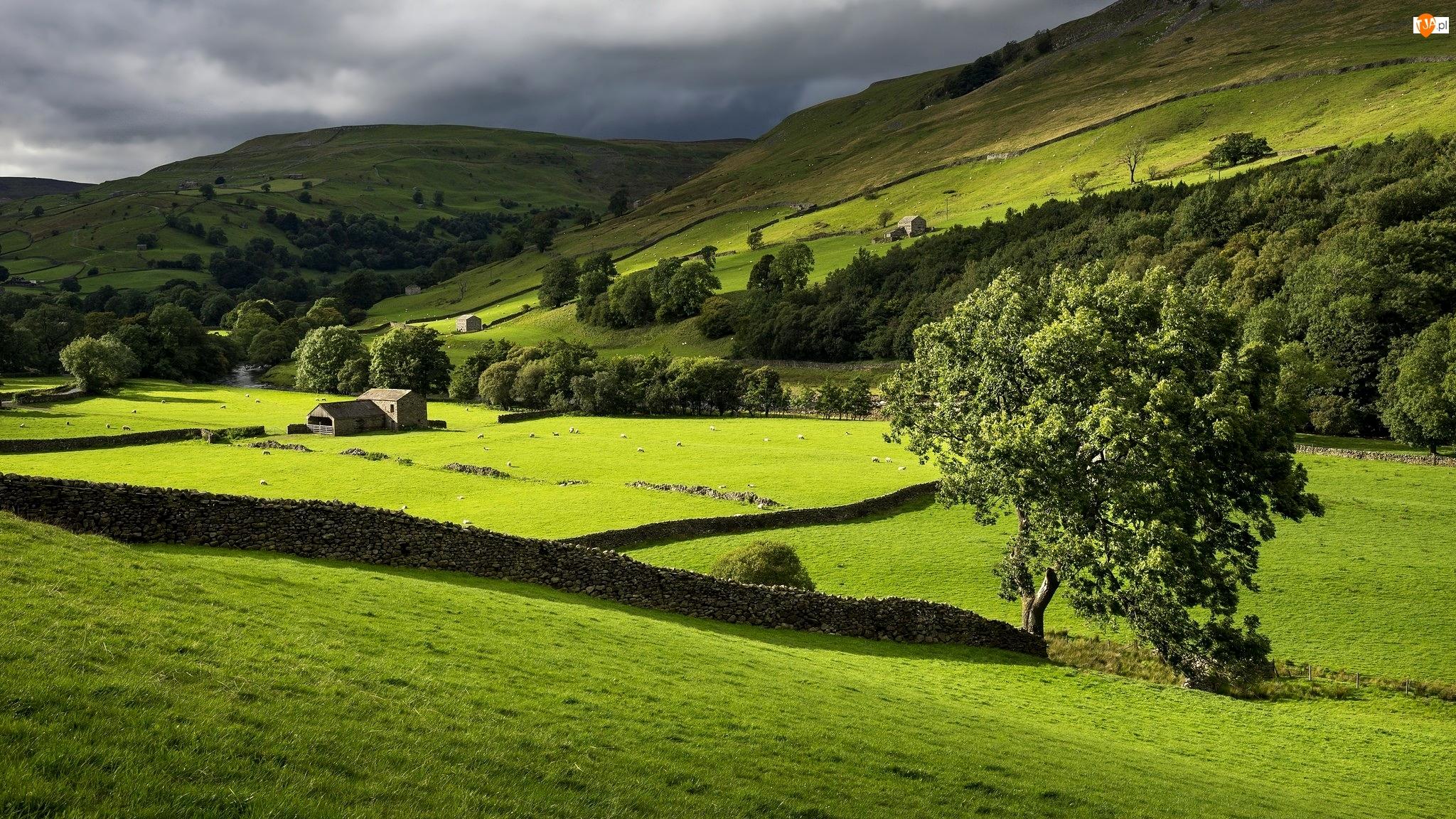 Owce, Kamienne, Murki, Drzewa, Park Narodowy Yorkshire Dales, Dolina Swaledale, Góry, Anglia, Łąka, Budynki