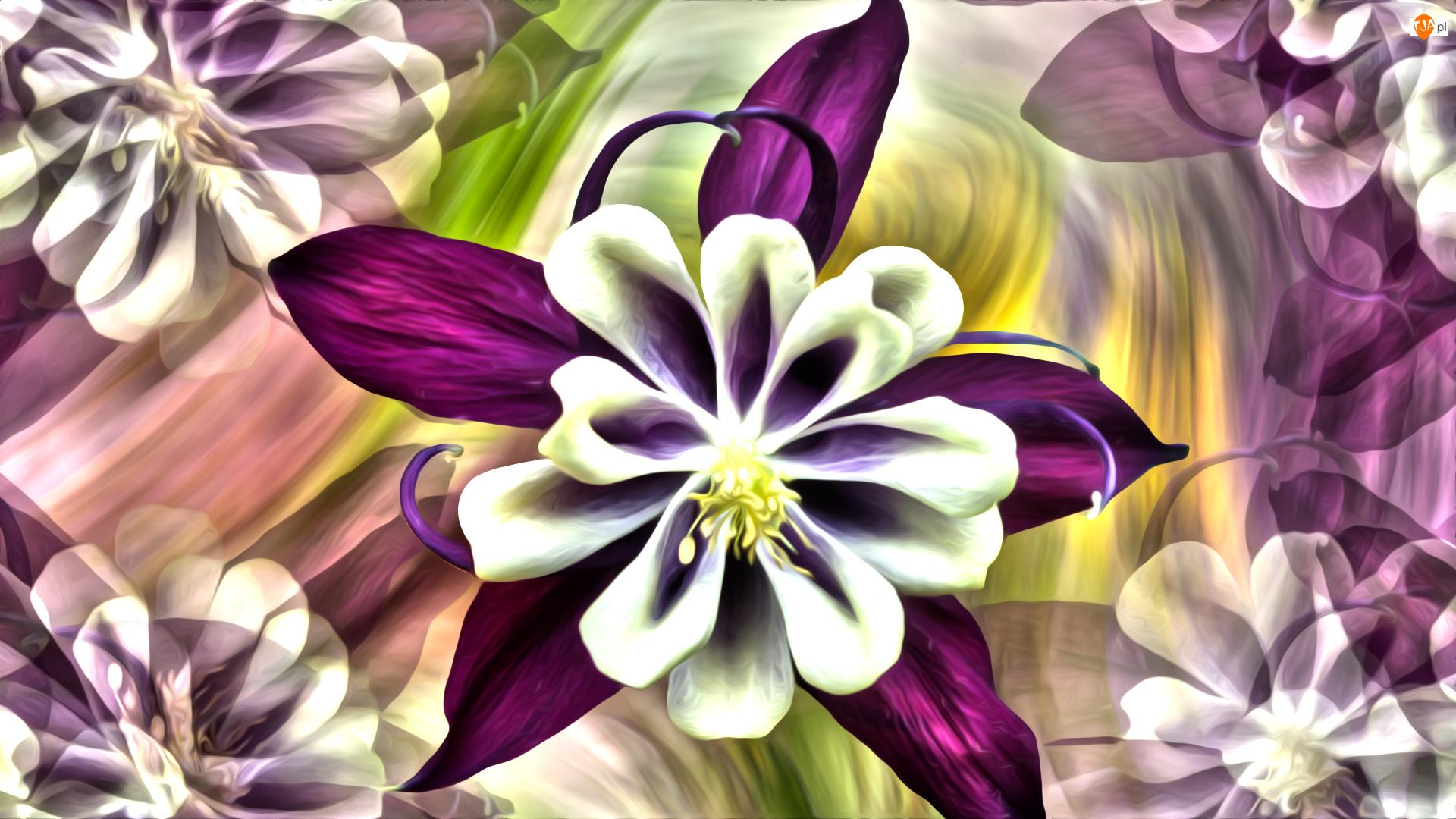 Grafika, Kwiaty, Orlik