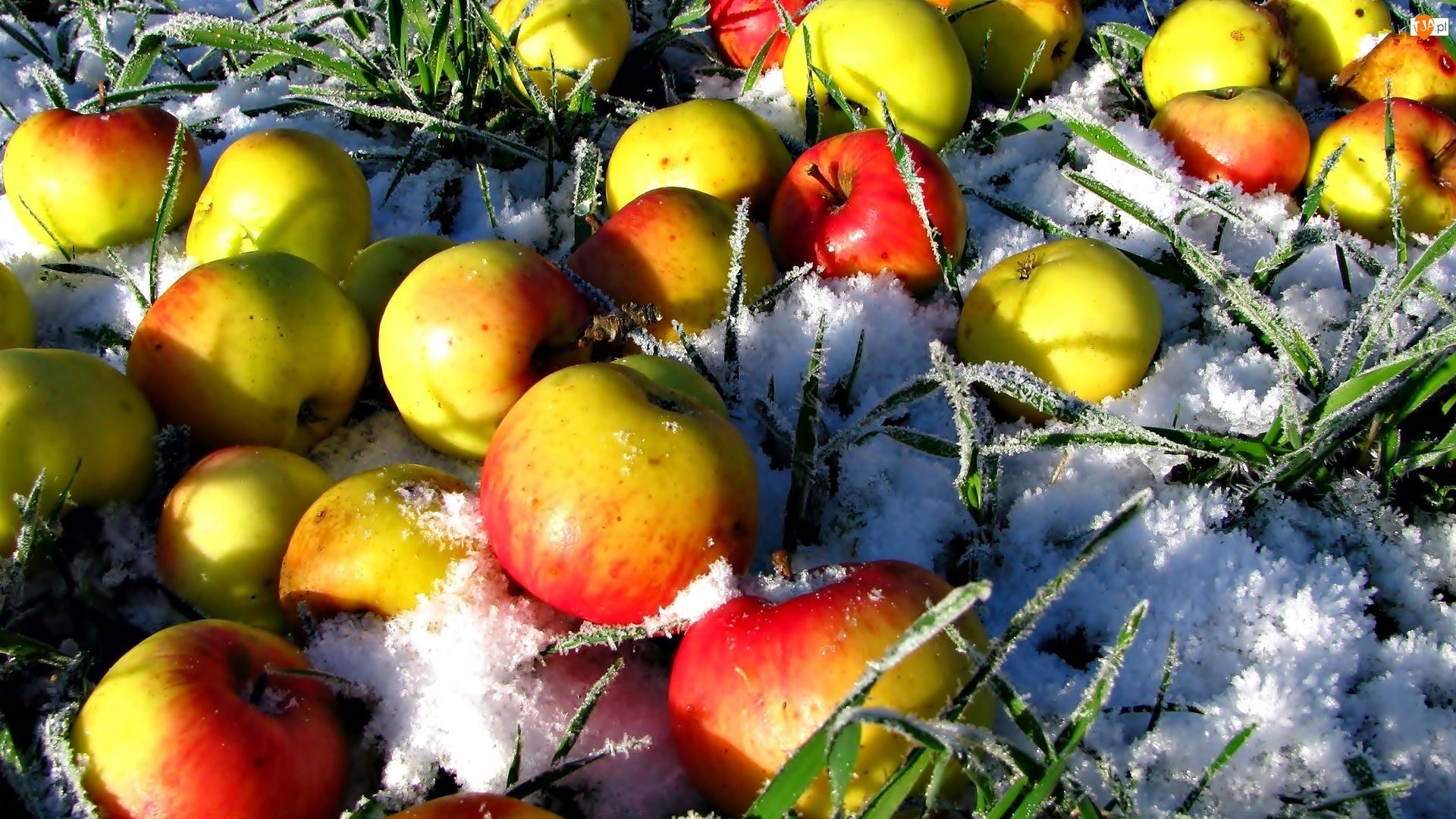 Trawa, Jabłka, Śnieg