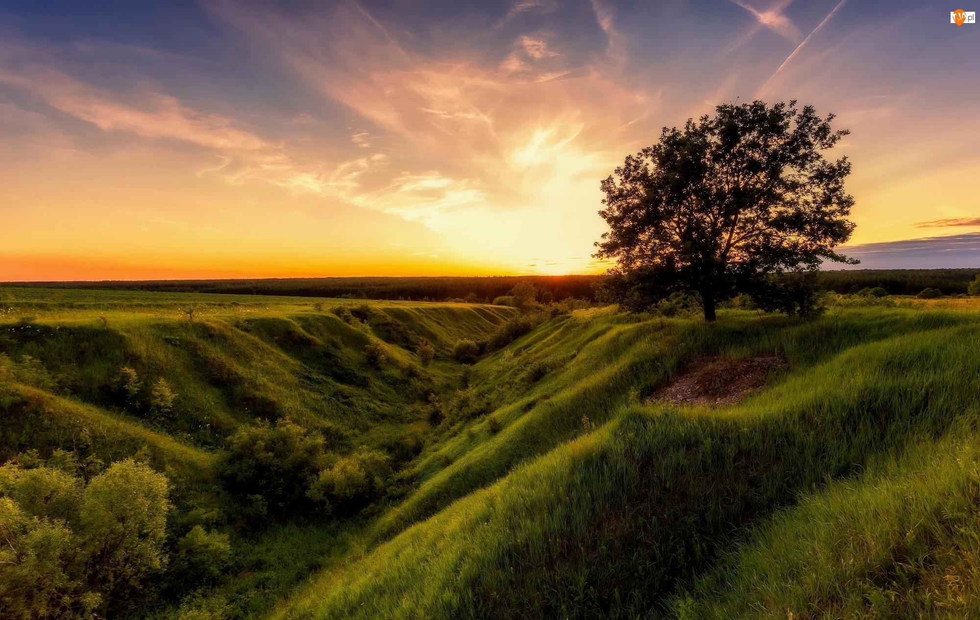 Zachód słońca, Pola, Drzewo, Rów