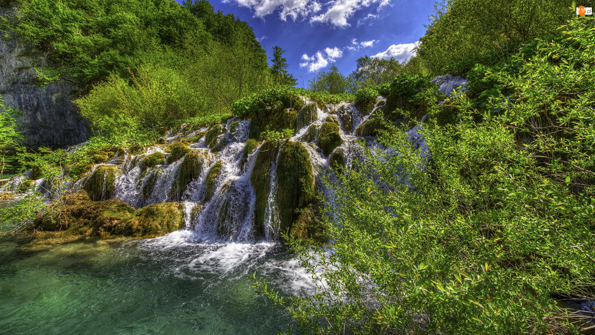Wodospad, Roślinność, Chorwacja, Park Narodowy Jezior Plitwickich, Drzewa