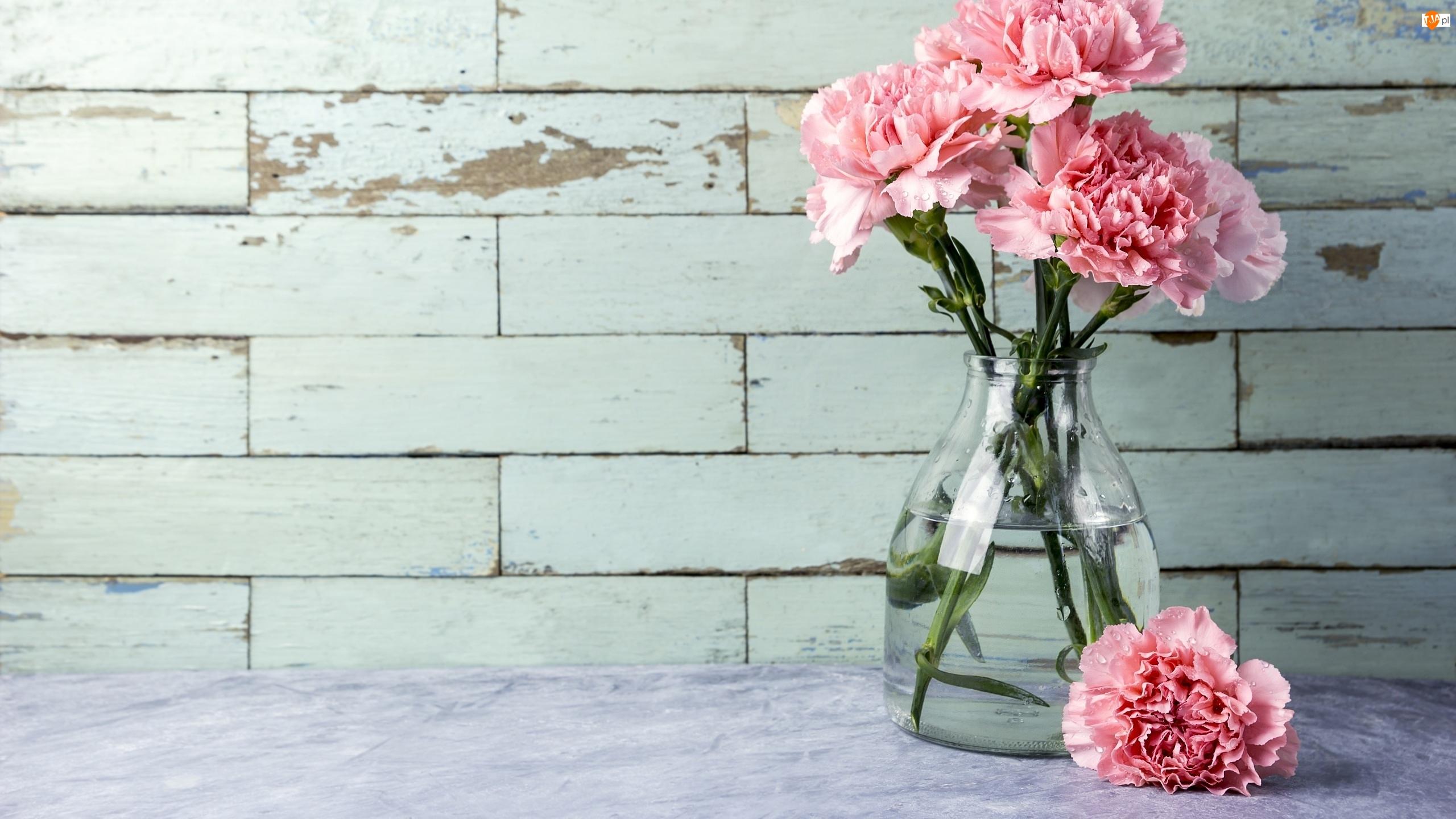 Wazon, Kwiat, Goździki