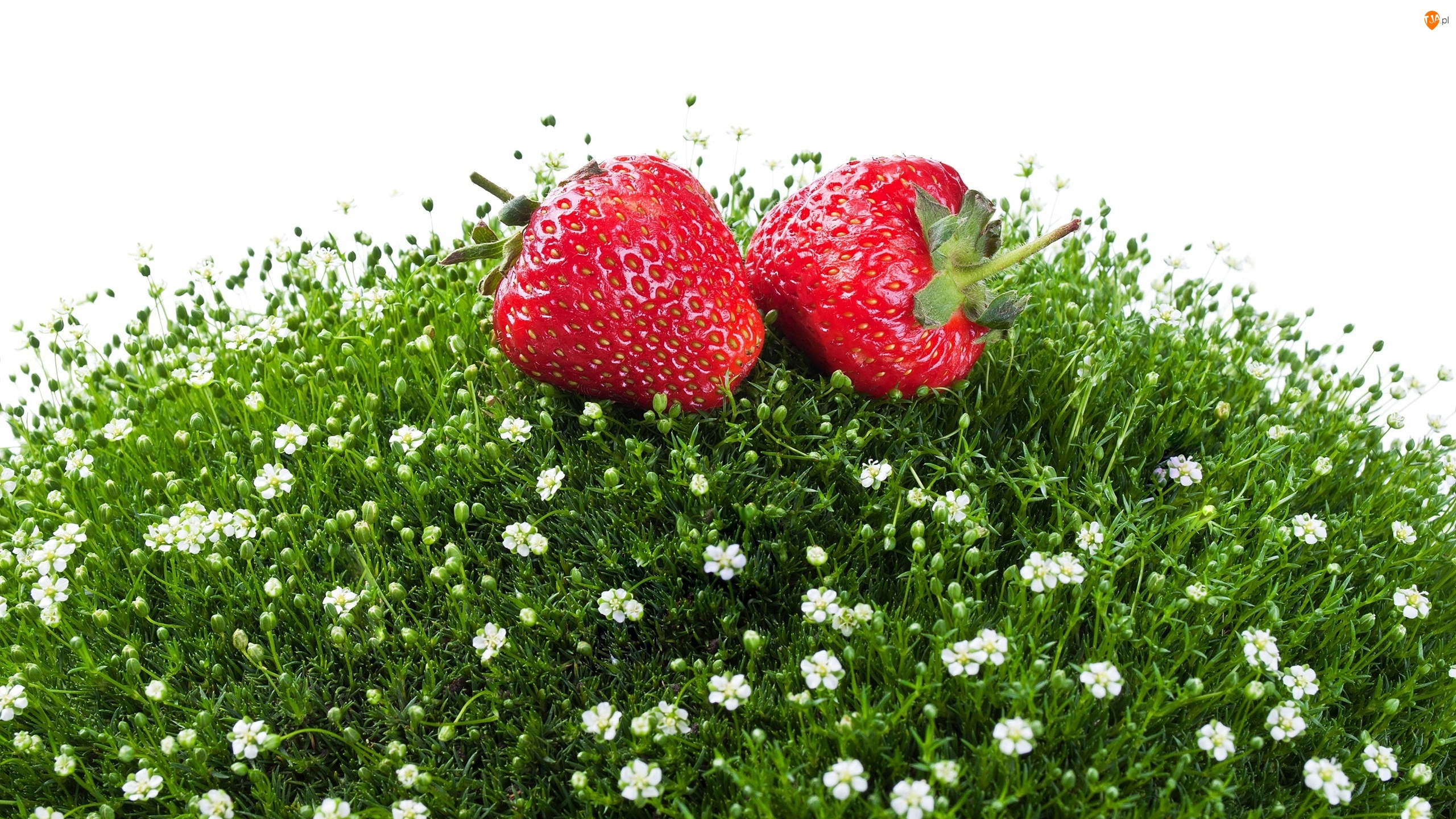 Białe tło, Truskawki, Trawa, Kwiatki