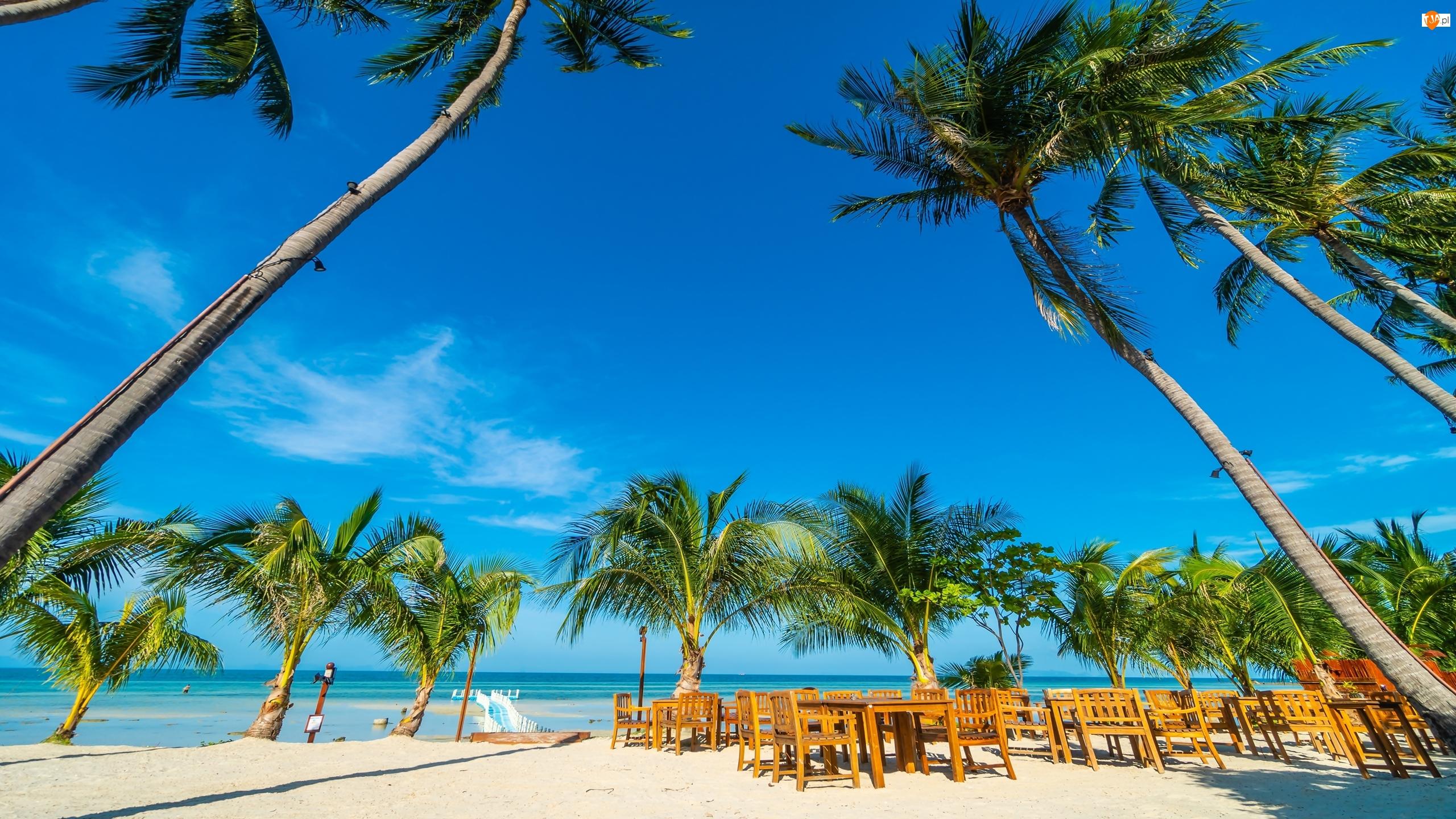 Krzesła, Morze, Palmy