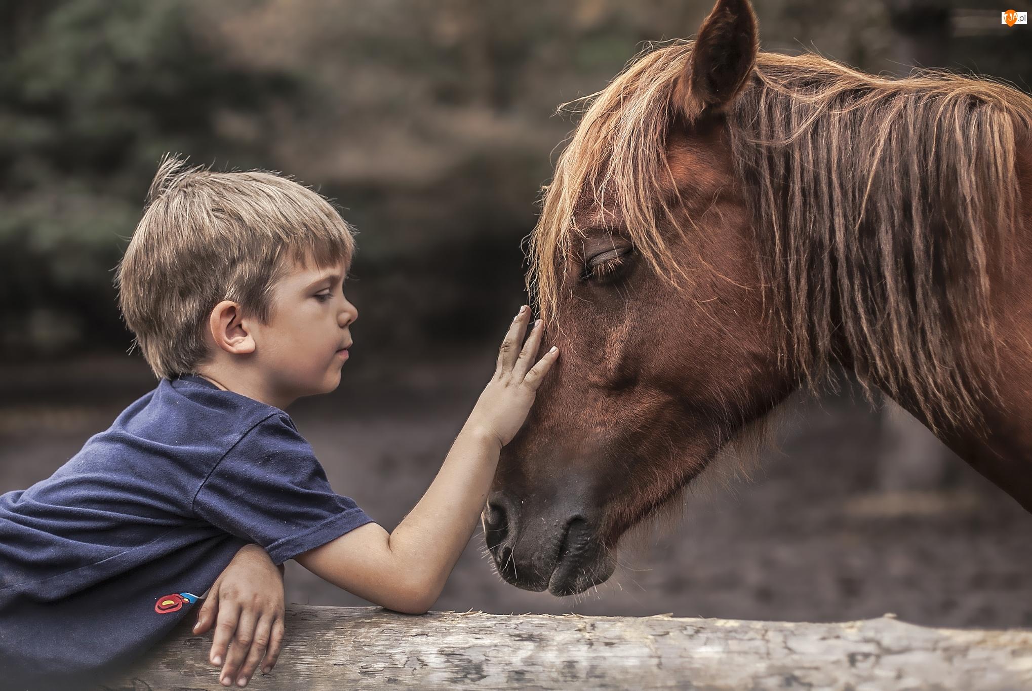 Koń, Chłopiec
