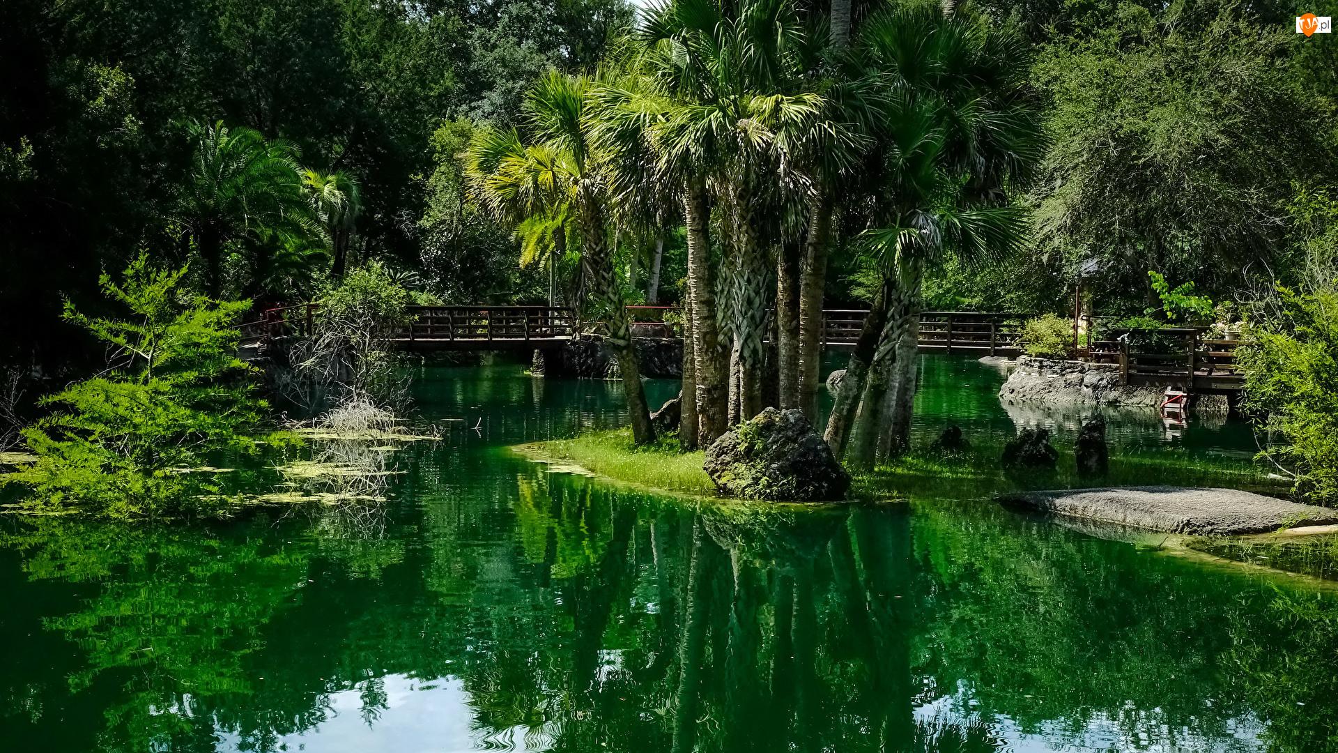 Ogród, Staw, Stany Zjednoczone, Ogród botaniczny Cedar Lakes Woods and Gardens, Stan Floryda, Mostek, Palmy