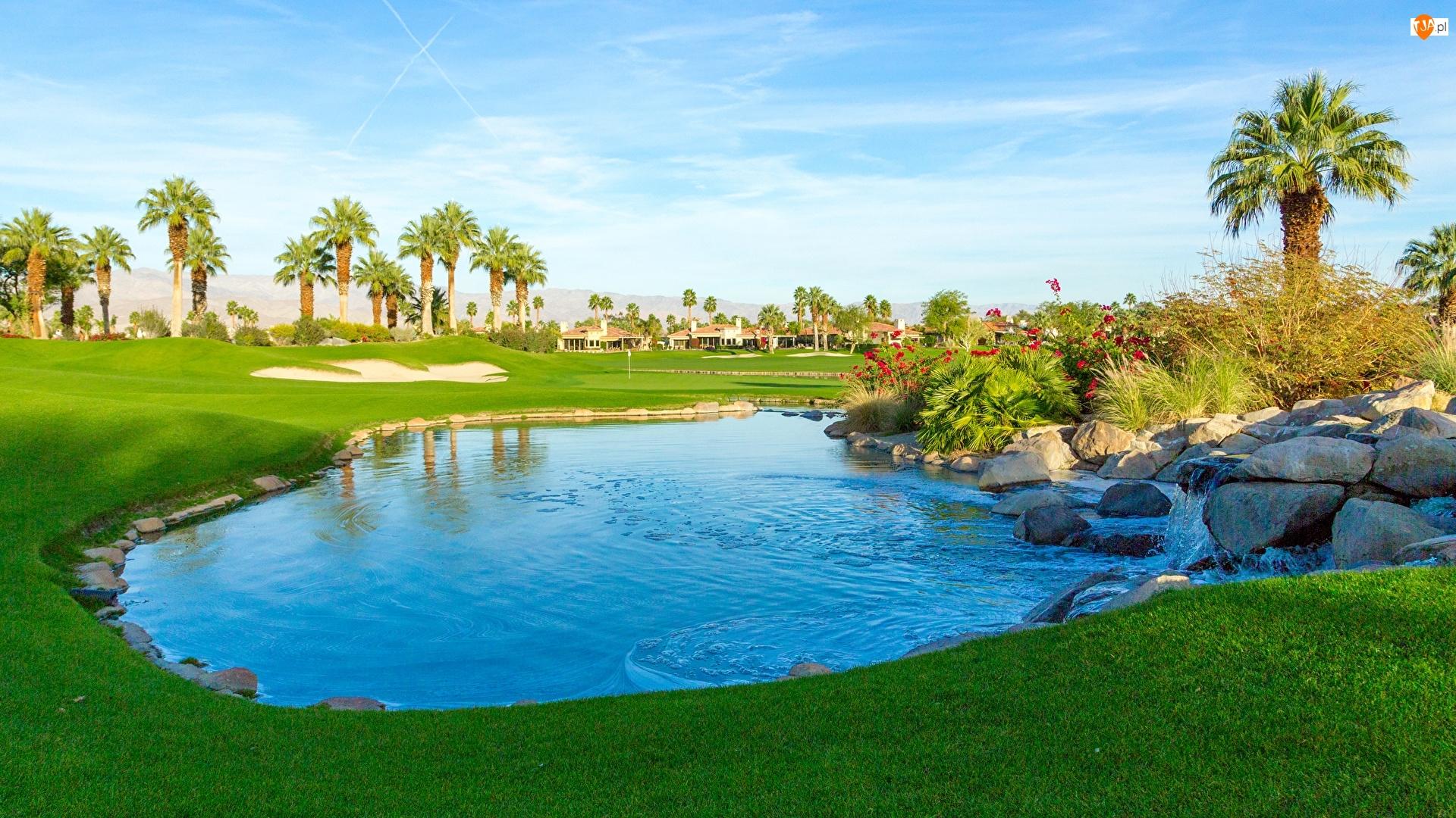 Staw, Kamienie, Stany Zjednoczone, Pole golfowe, Kalifornia, Miejscowość Palm Springs, Palmy