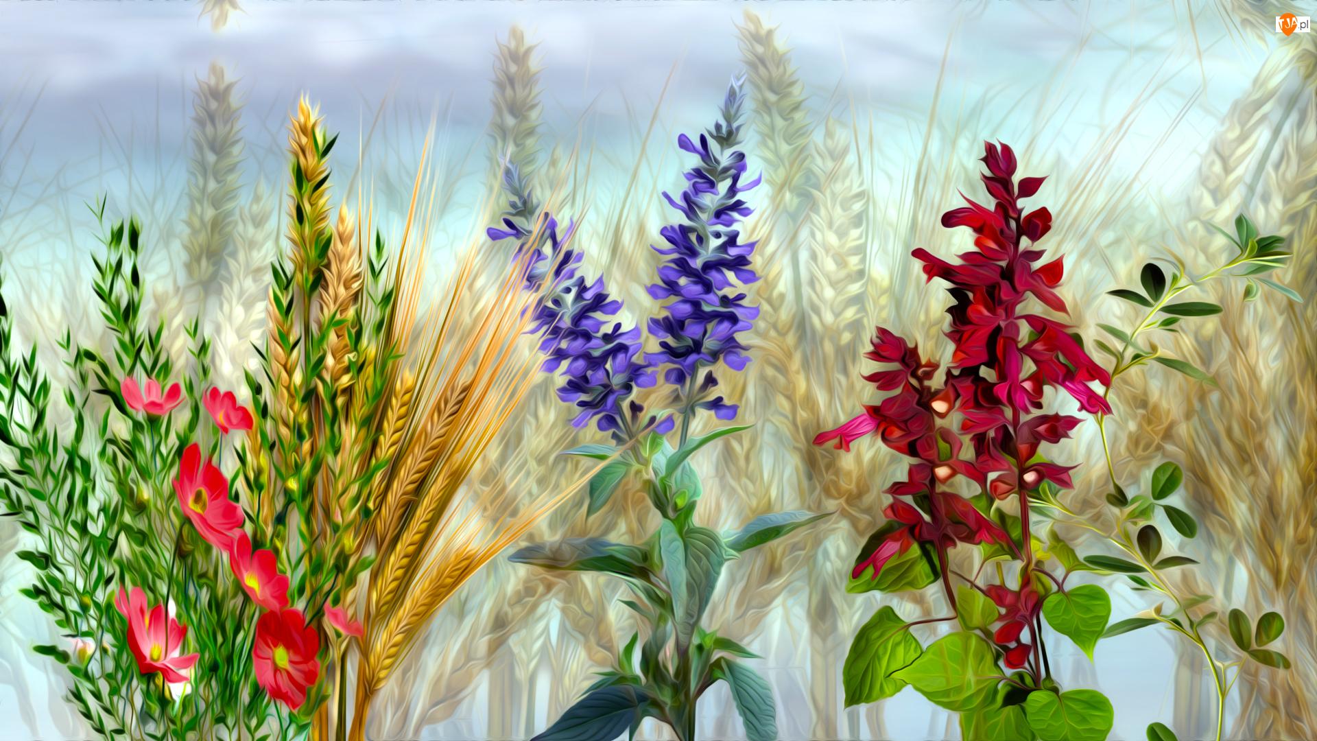 Grafika, Kwiaty, Zboże