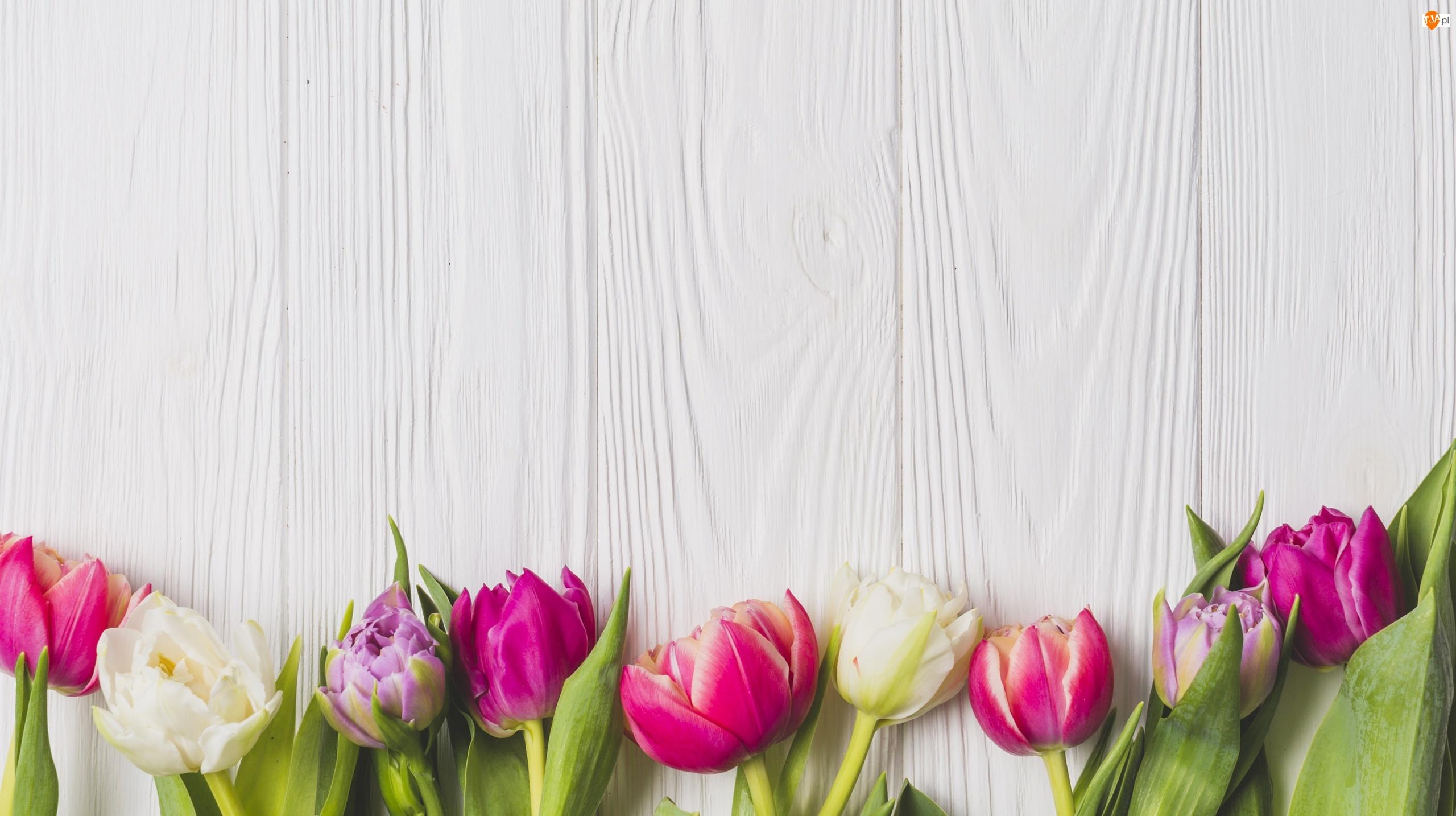 Deski, Kolorowe, Kwiaty, Tulipany