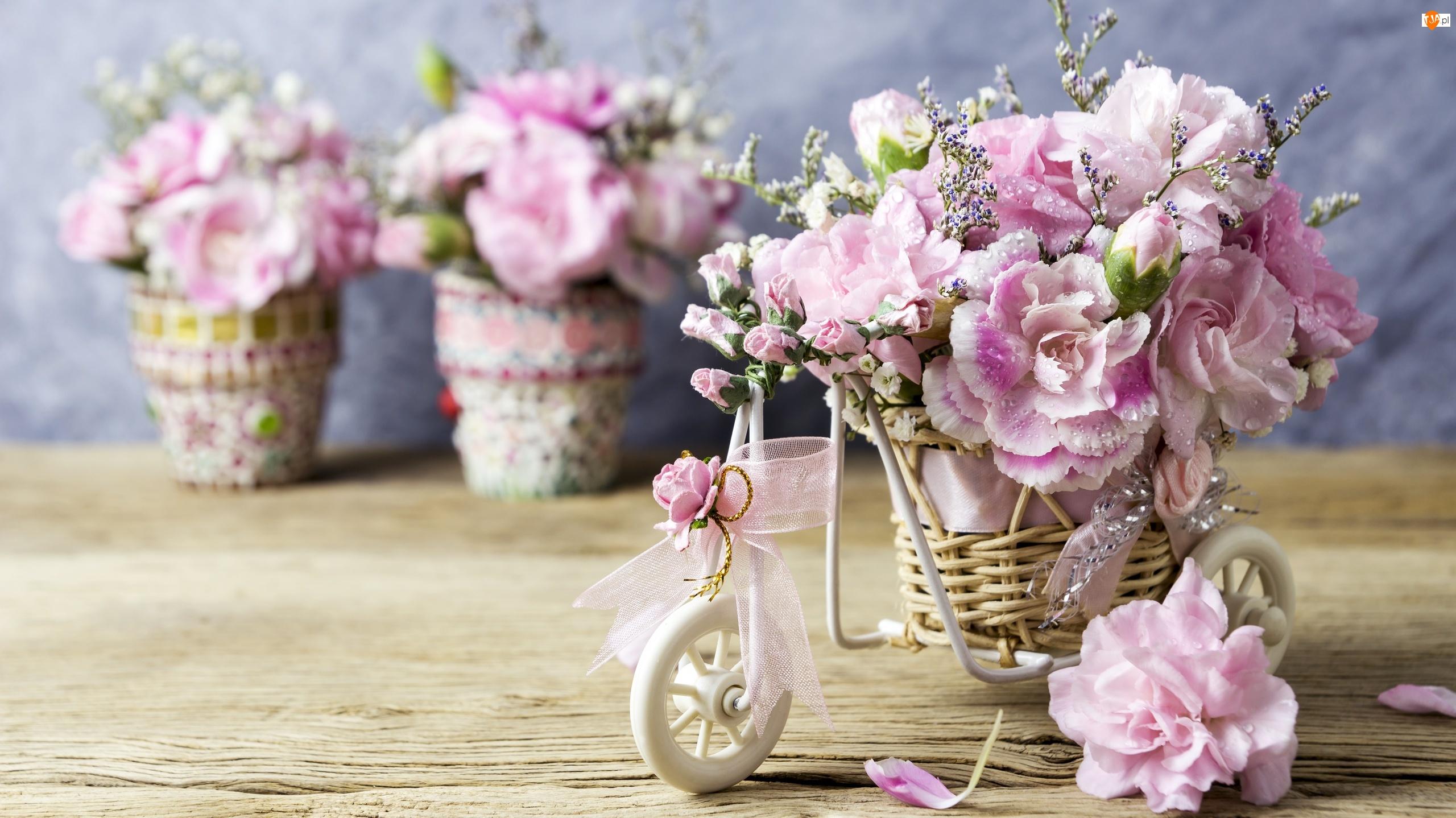 Goździki Szabo, Rowerek, Kwiaty