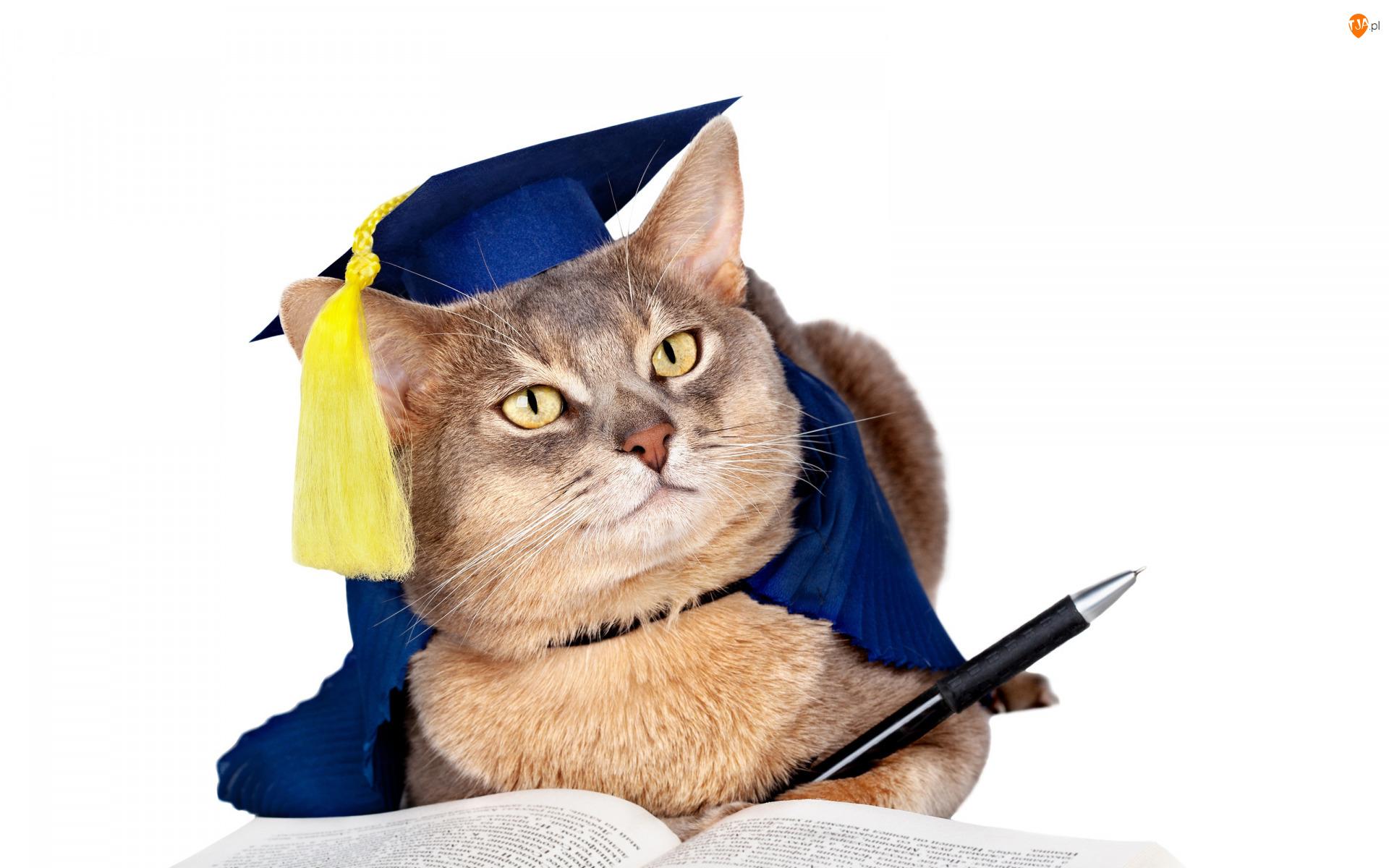 Kot, Śmieszny, Długopis, Tło białe, Uczeń, Książka