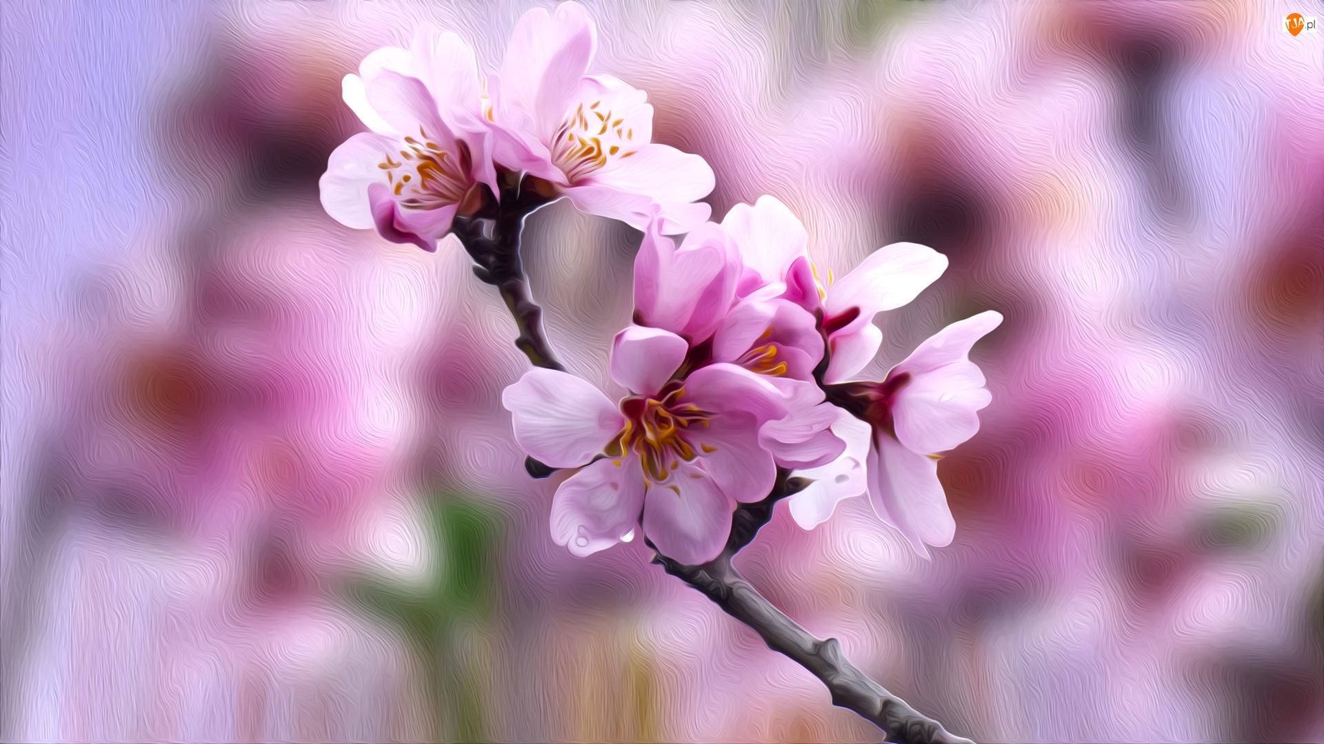 Kwiaty, Grafika, Drzewo owocowe, Gałązka