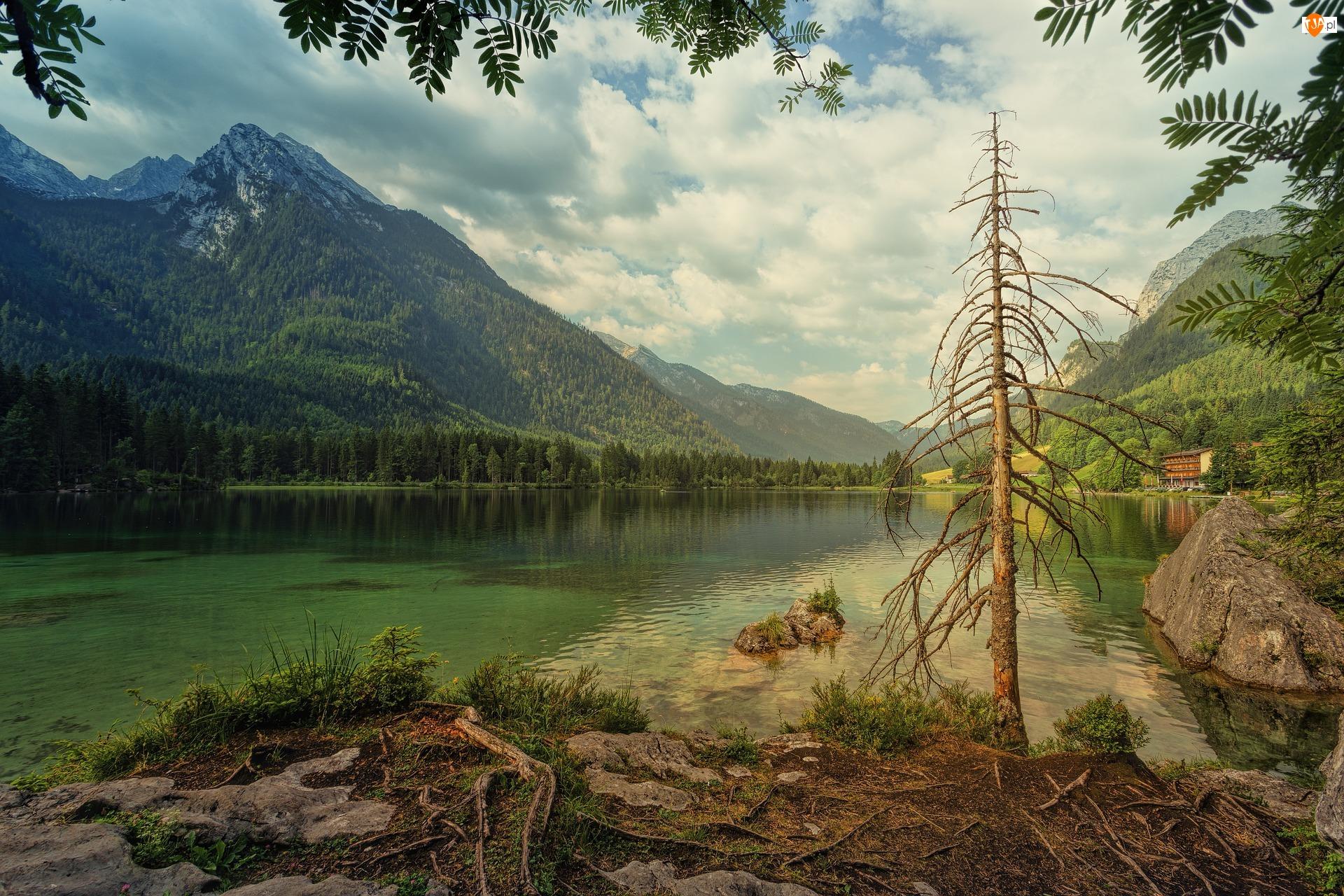 Jezioro Hintersee, Lasy, Niemcy, Góry Alpy, Bawaria, Gmina Ramsau bei Berchtesgaden, Drzewo