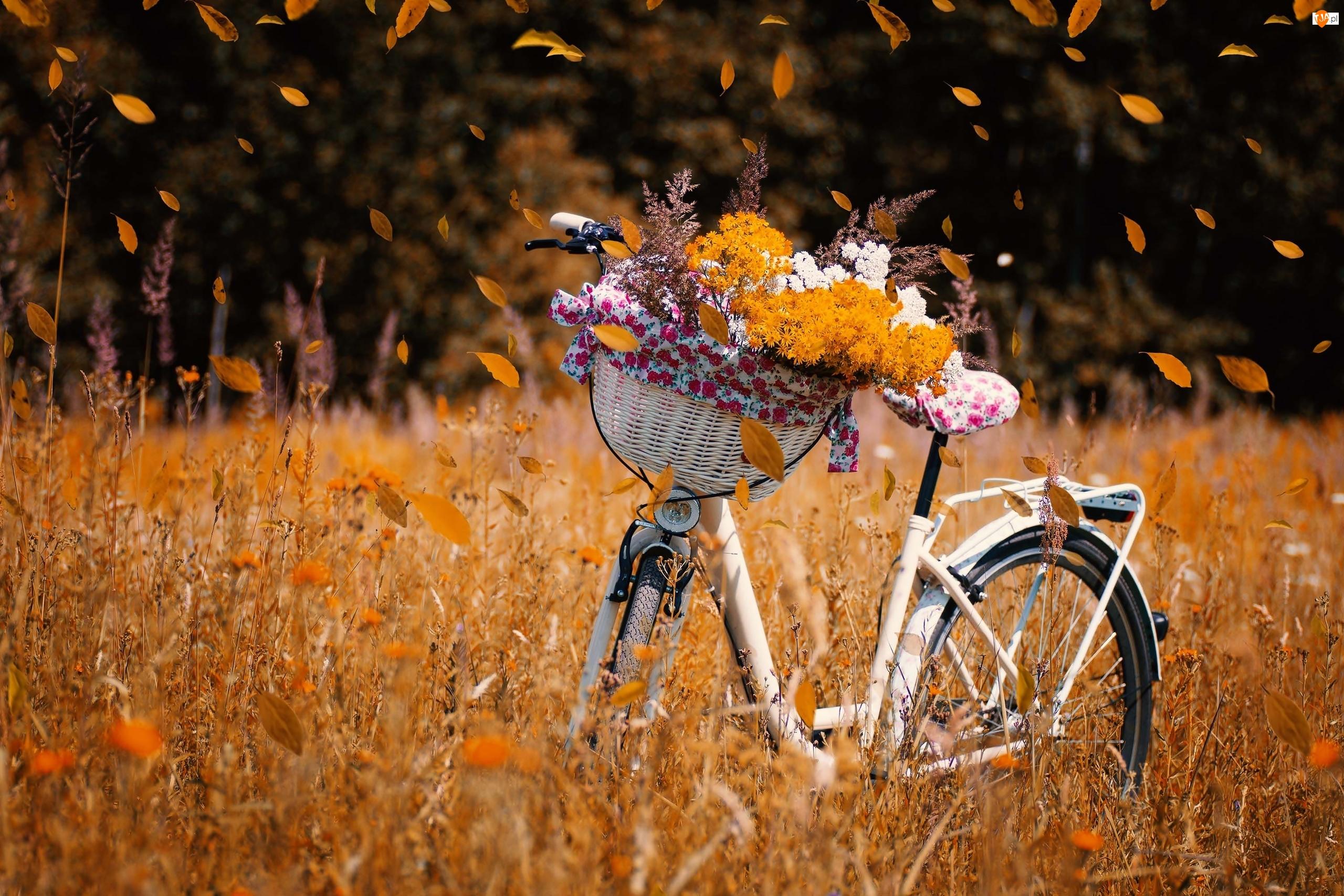 Koszyk, Rower, Łąka, Jesień, Kwiaty, Liście