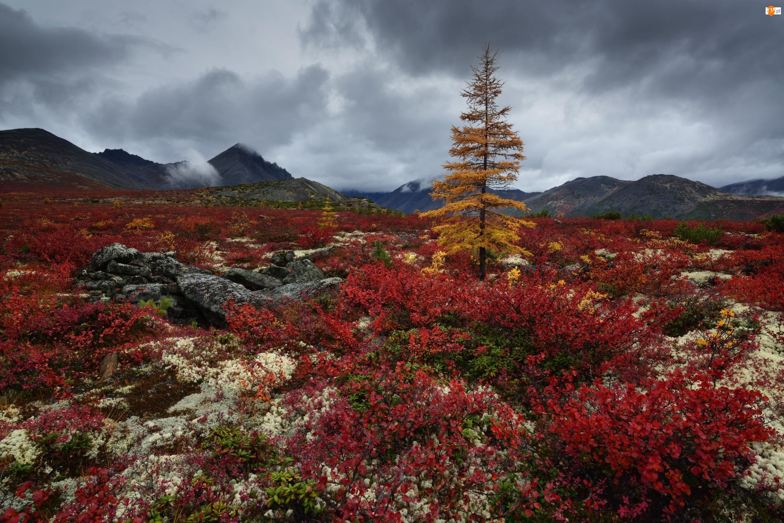 Kołyma, Drzewa, Kamienie, Obwód magadański, Góry Kołymskie, Jesień, Rosja, Roślinność