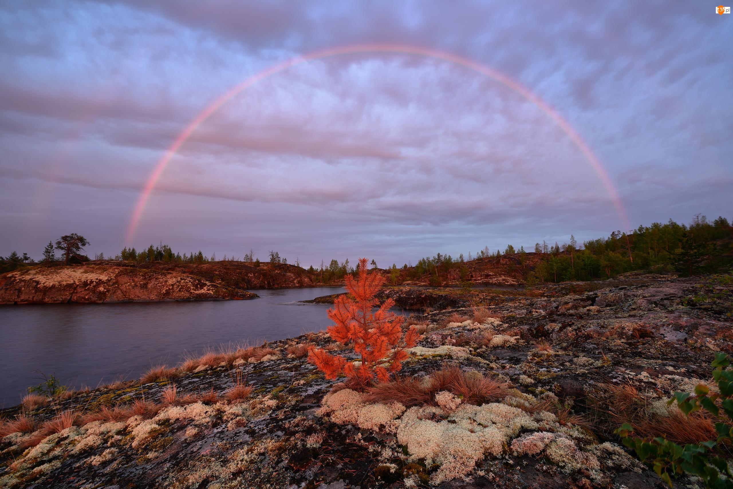 Tęcza, Trawy, Jezioro Ładoga, Rosja, Drzewa