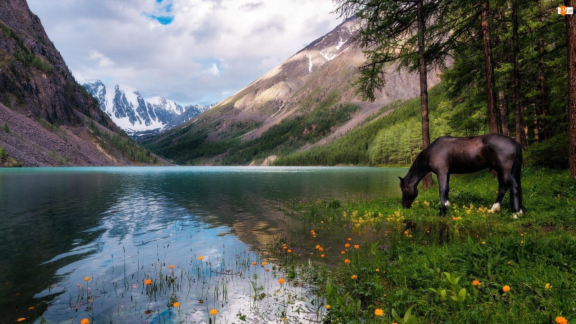 Koń, Drzewa, Jezioro, Góry, Kwiaty