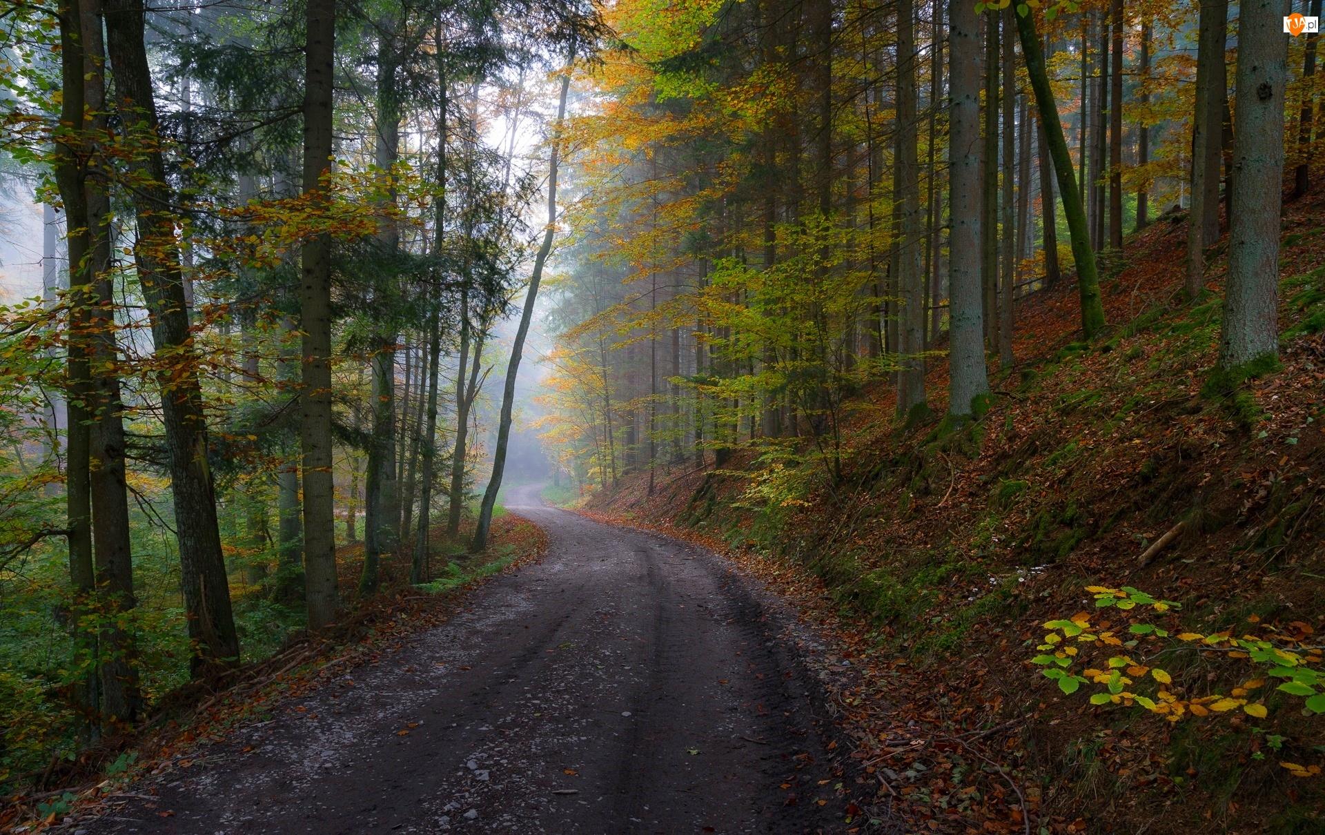 Drzewa, Jesień, Droga, Las, Mgła