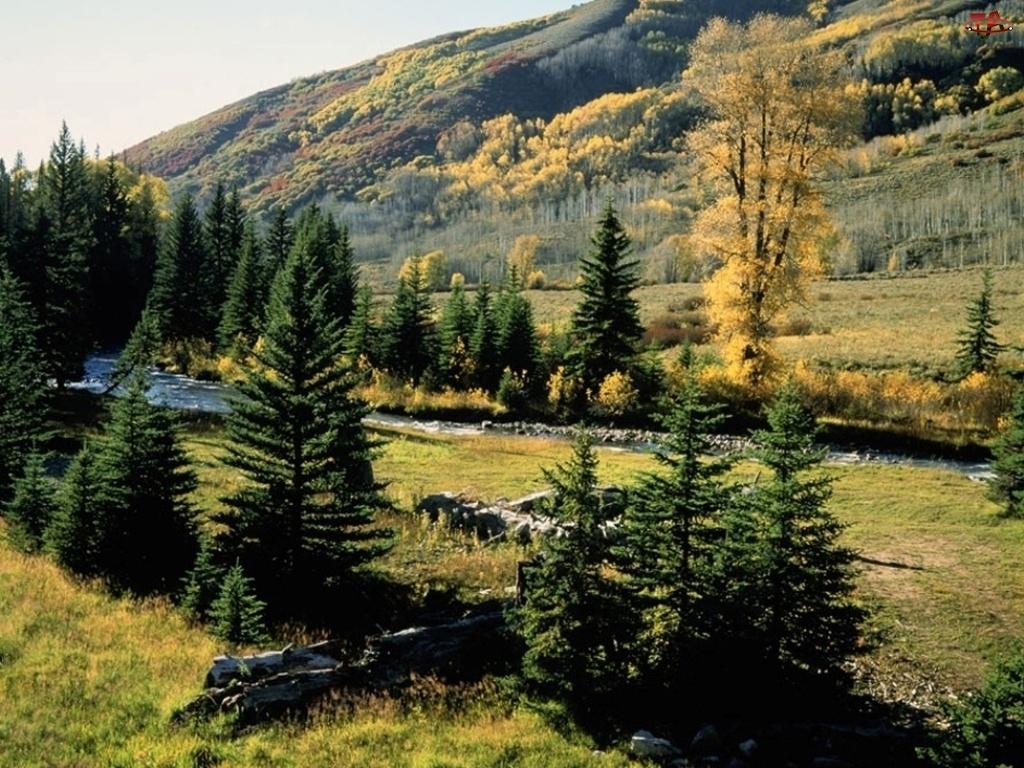 Góry, choinki, Krzew, łąka