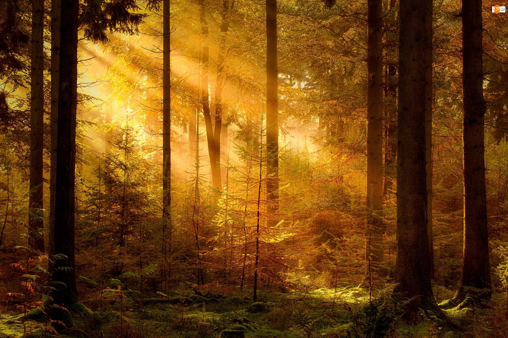 Rośliny, Las, Przebijające światło, Drzewa