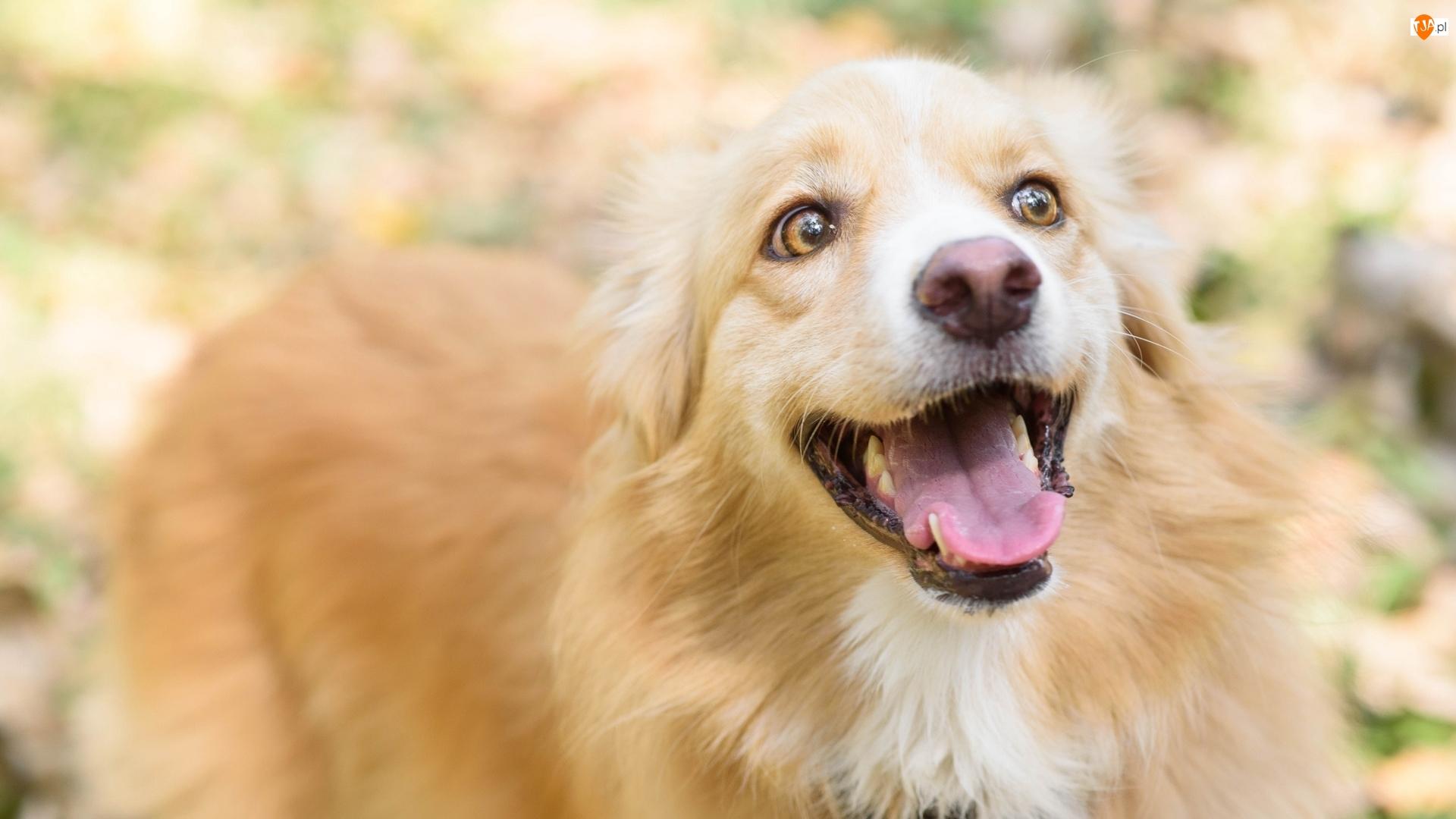 Radość, Pies