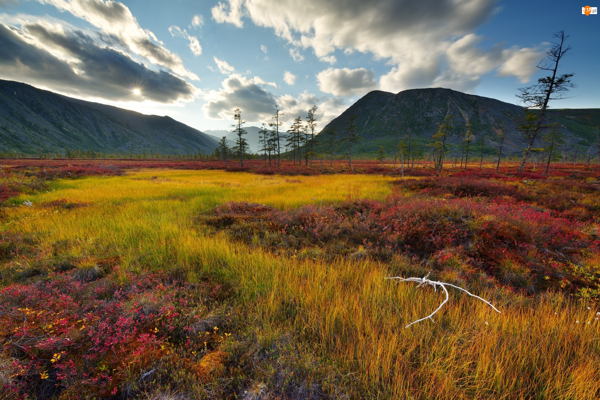 Obwód magadański, Kołyma, Chmury, Rosja, Roślinność, Drzewa, Góry Kołymskie