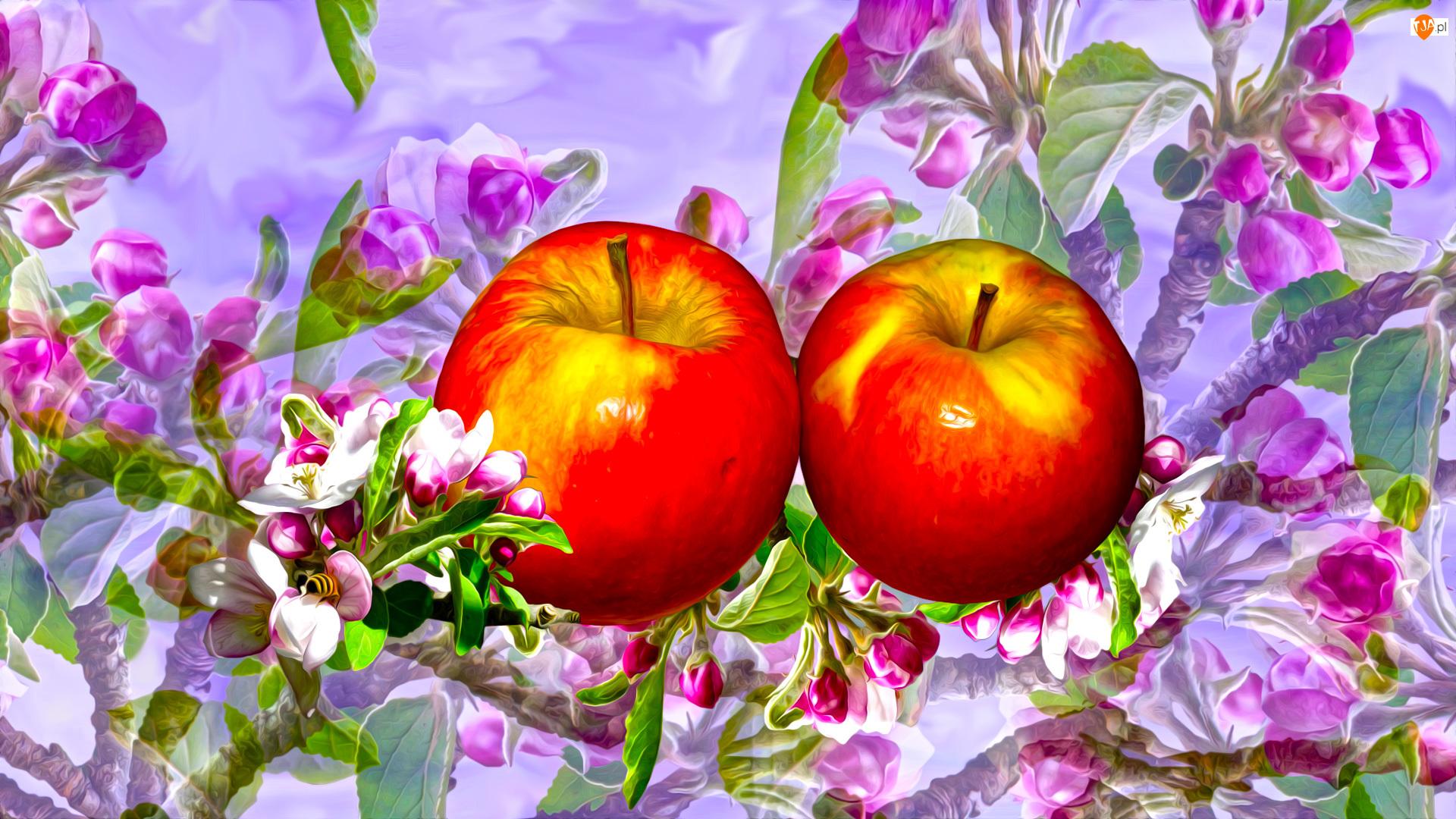 Grafika, Jabłka, Kwiaty jabłoni