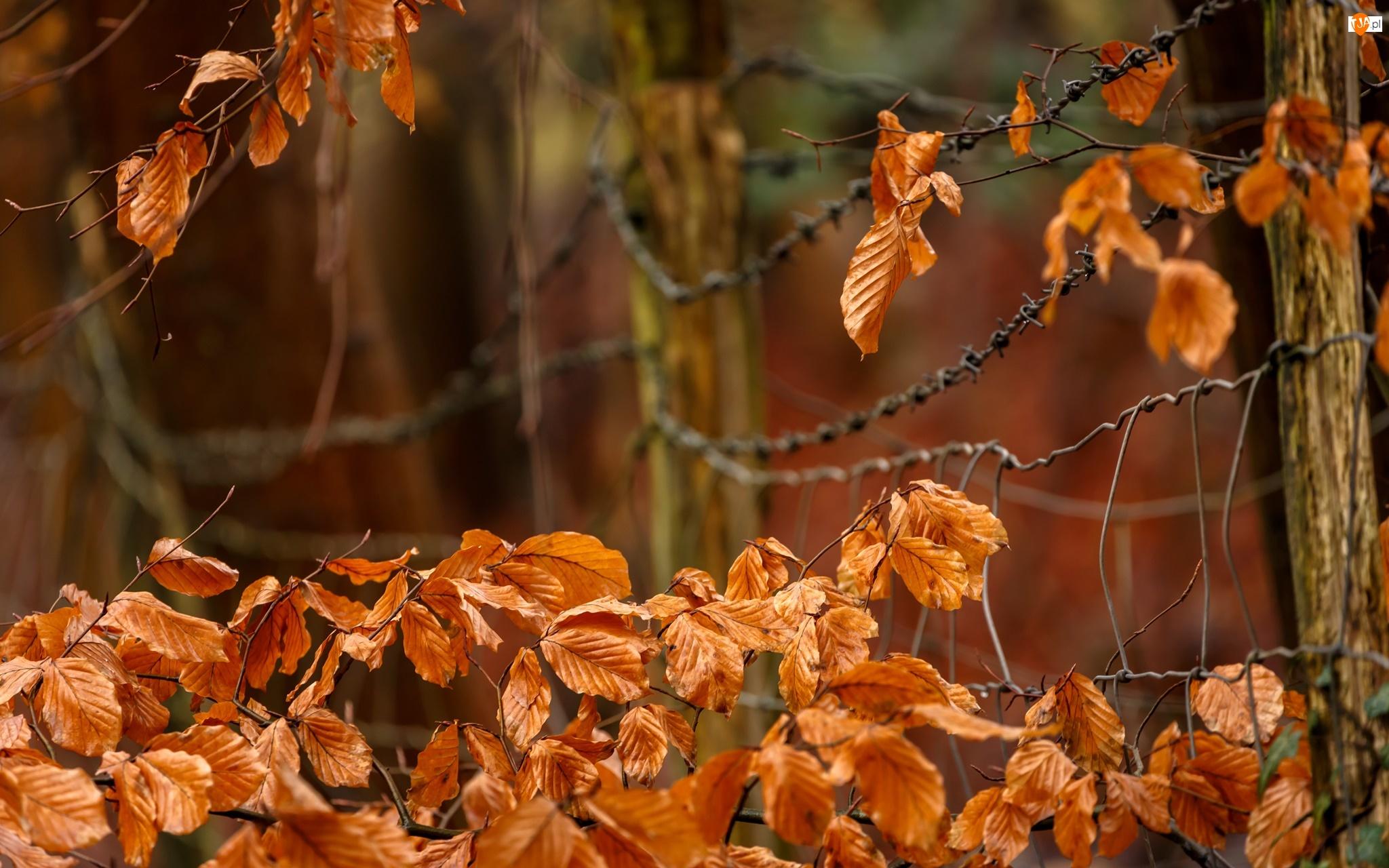 Siatka, Liście, Jesień