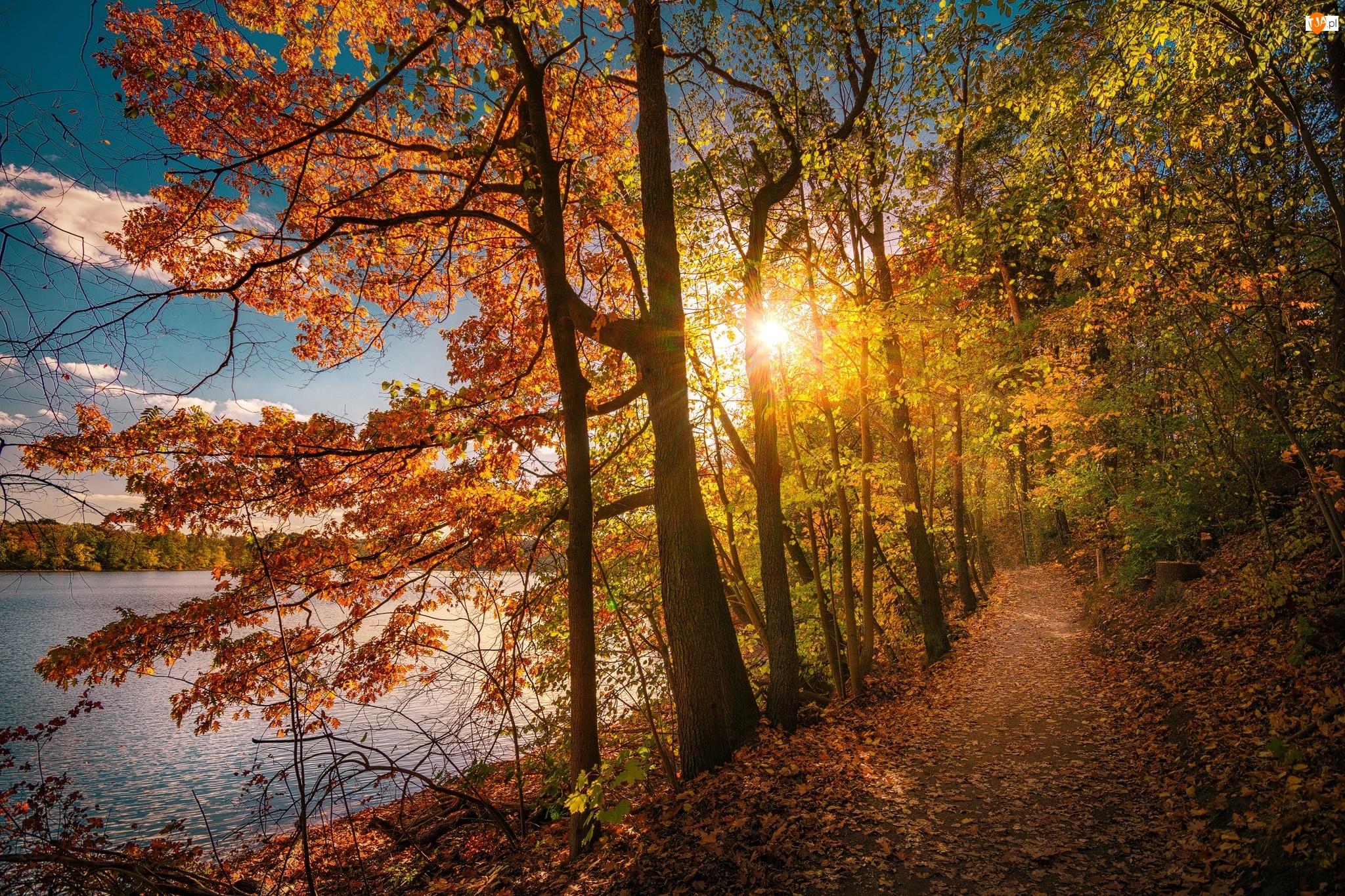 Jesień, Wschód słońca, Drzewa, Jezioro, Ścieżka